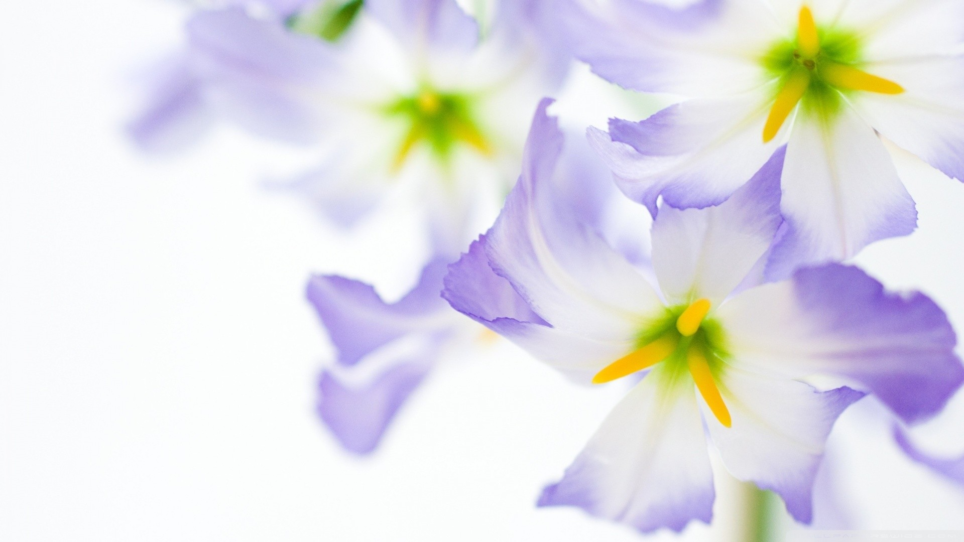 Res: 1920x1080, 7. flowers-background-wallpaper6-600x338