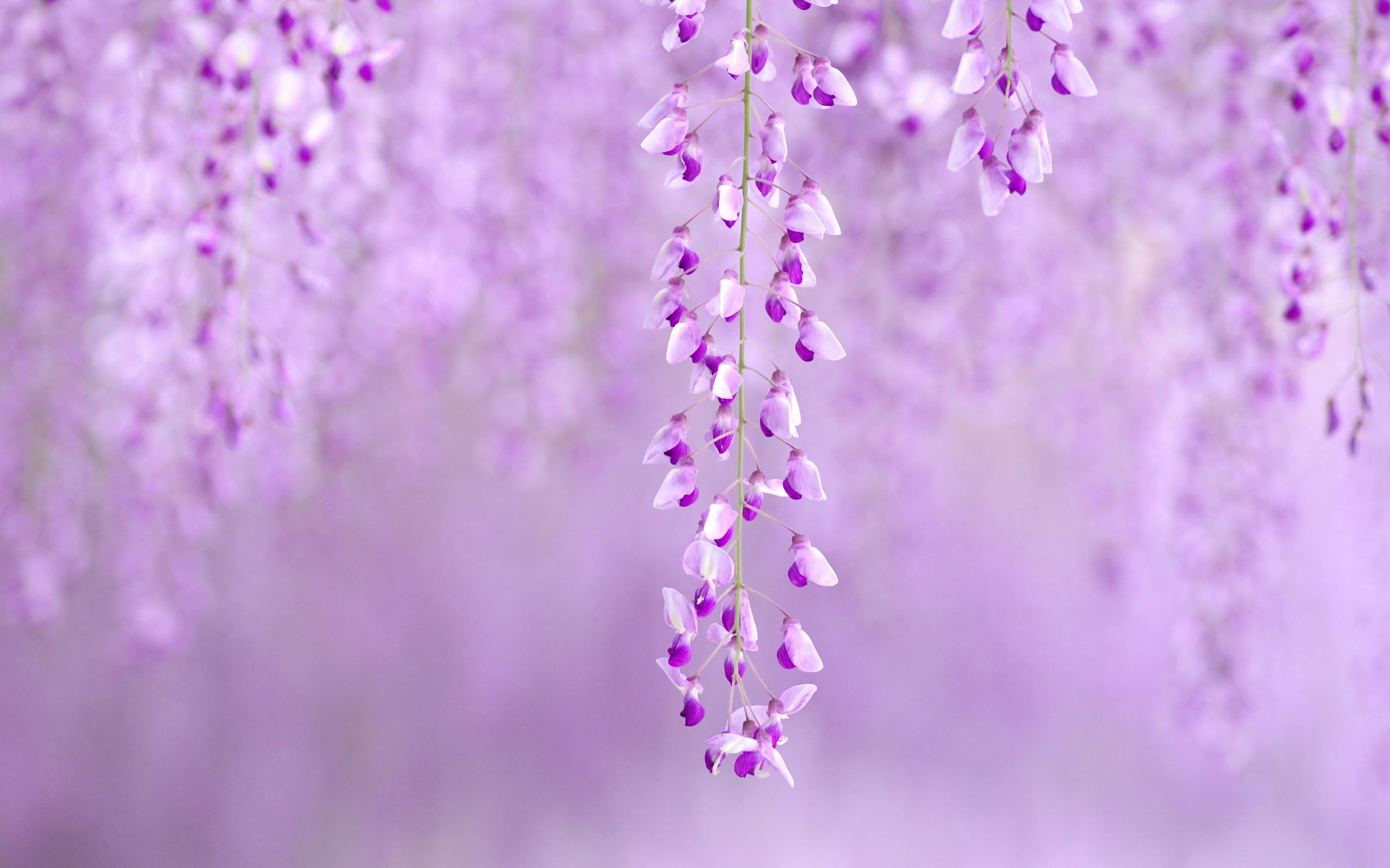 Res: 2560x1600, Spring Flowers Background. Wallpaper: Spring Flowers Background