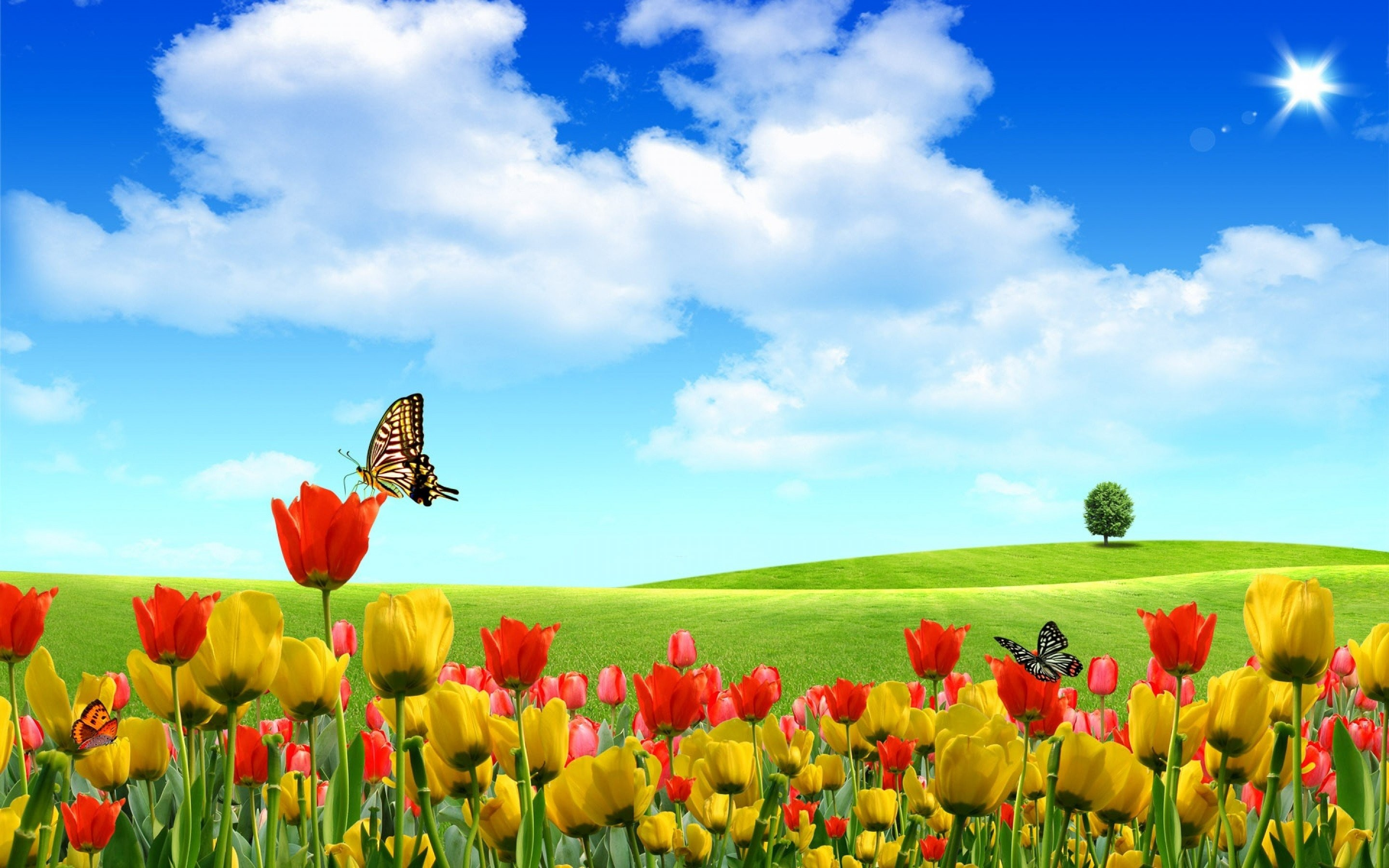 Res: 2880x1800, Tulip Flowers Background Wallpaper