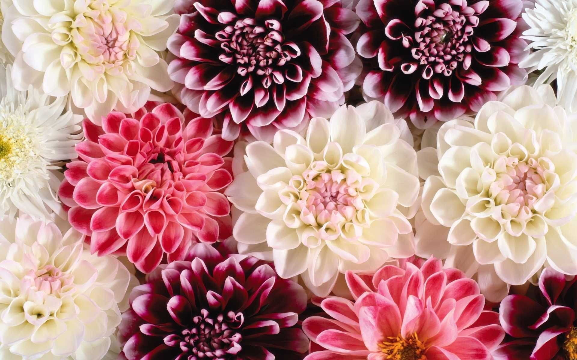Res: 1920x1200, Hd Flower Wallpapers HD Hd Vintage Background Floral Tumblr Tumblr .