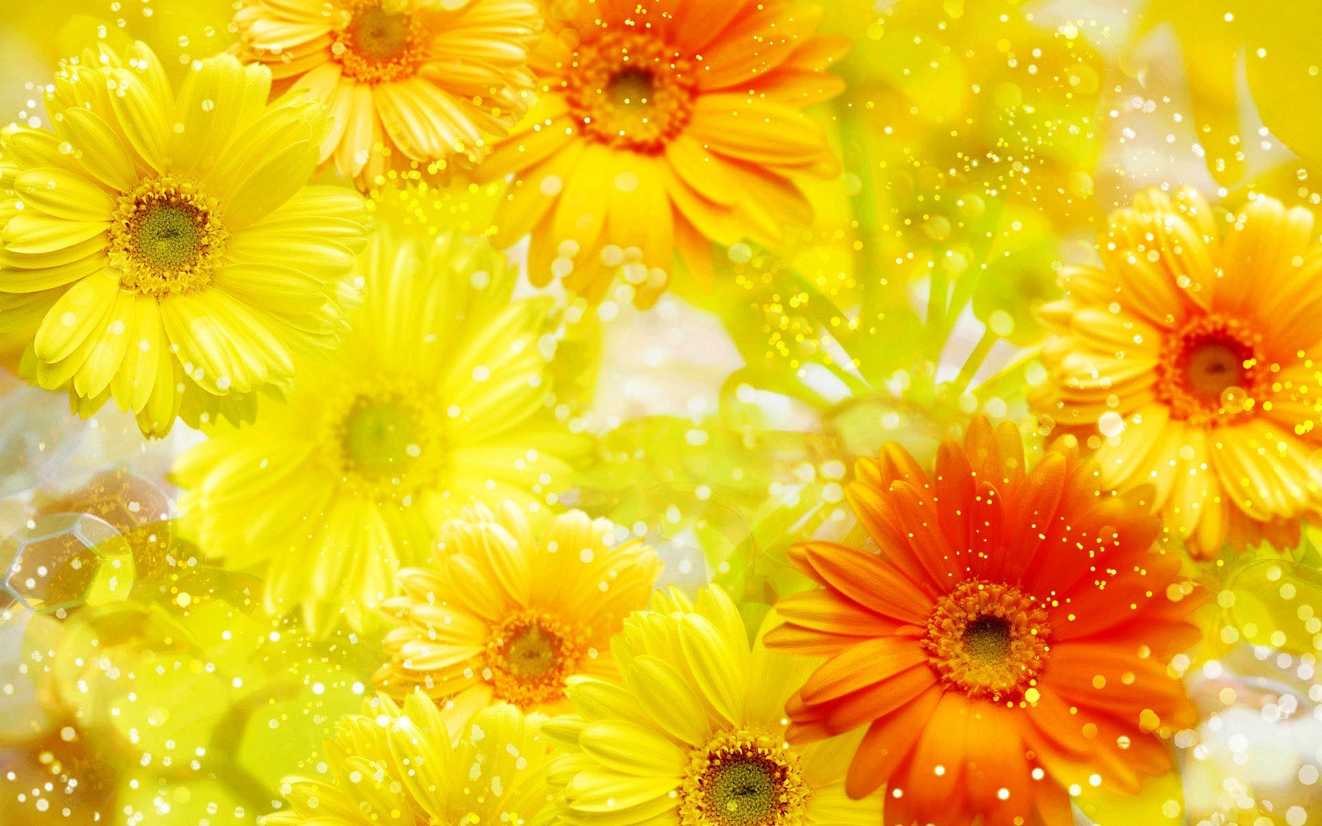 Res: 1920x1200, Yellow Flowers Background