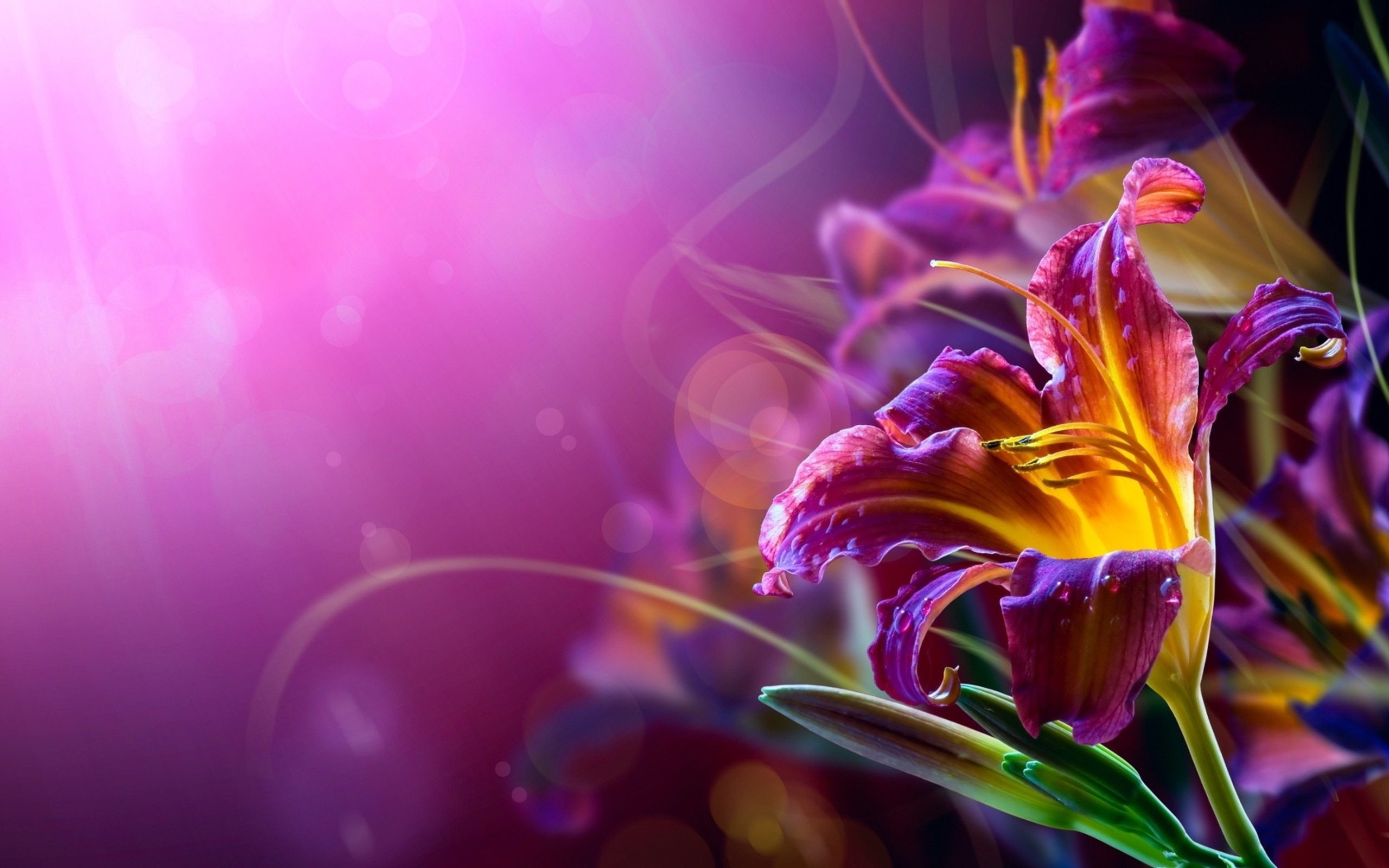 Res: 2560x1600, Violet, Flower, Widescreen, High, Resolution, Desktop, Background, Photos,  Download Wallpapers, Widescreen, Wallpaper Of Iphone, 2560×1600 Wallpaper HD