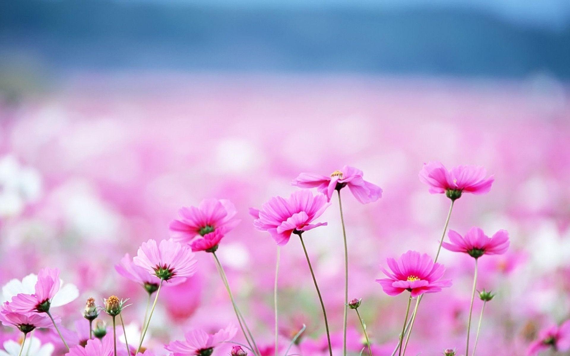 Res: 1920x1200, Download Hd Flower Background Wallpaper Images Backgrounds Floral Desktop  Cave Of Iphone