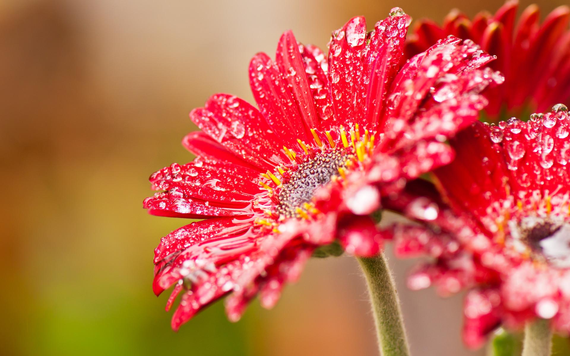 Res: 1920x1200, ... Nice Pics: Flower Desktop Background Wallpapers ...