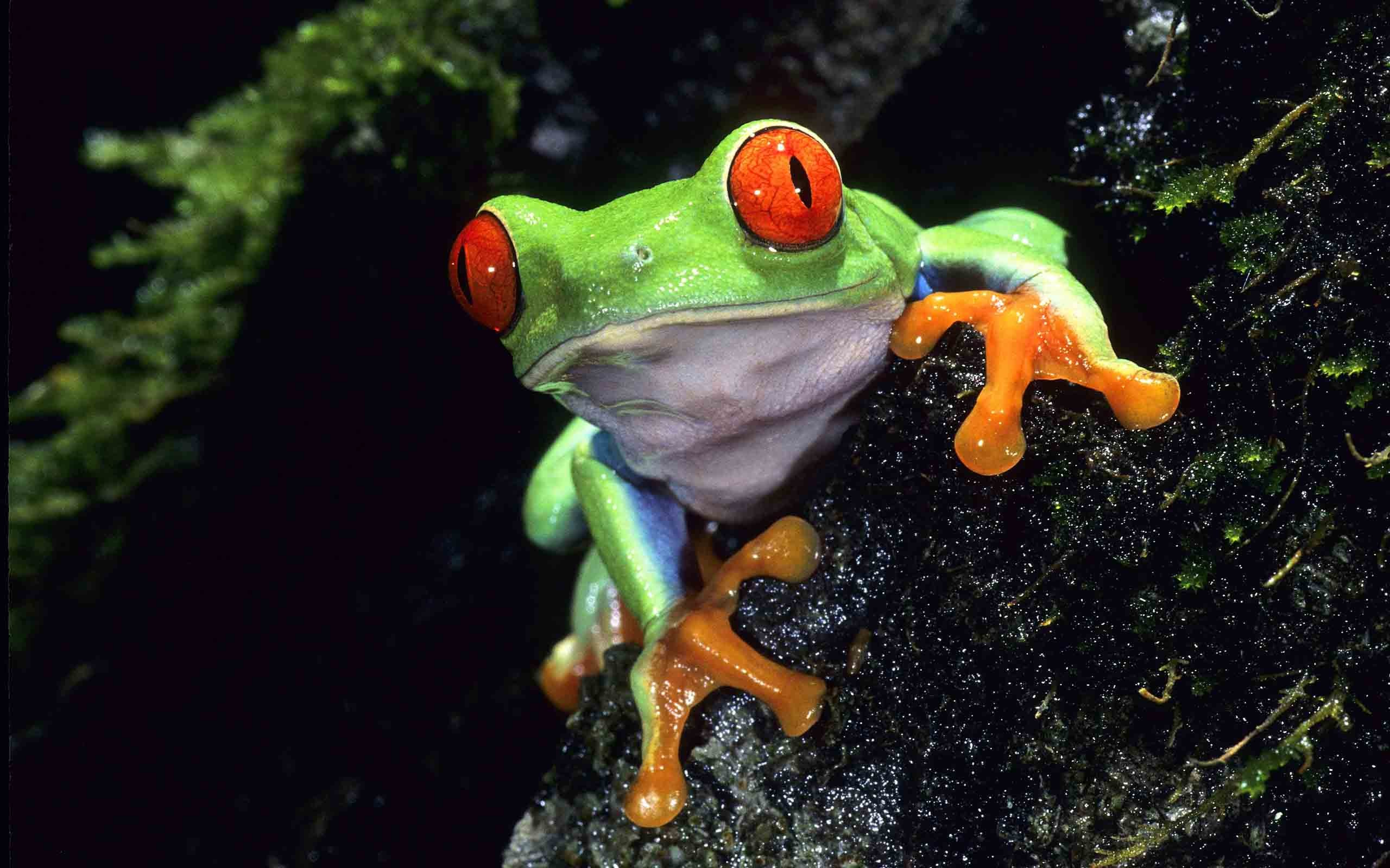Res: 2560x1600, Frog Wallpapers High Quality