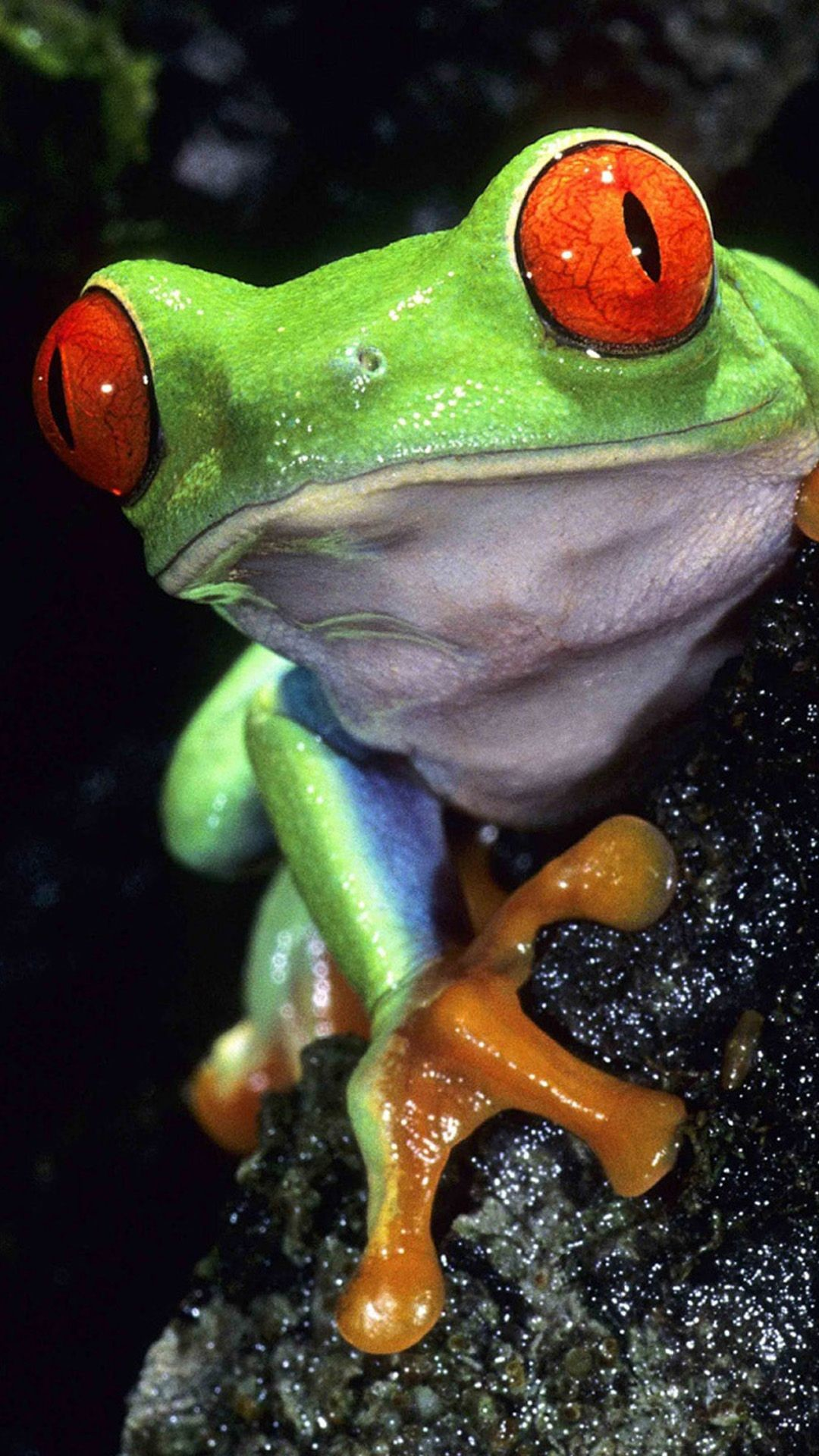 Res: 1080x1920, Beautiful Frog More