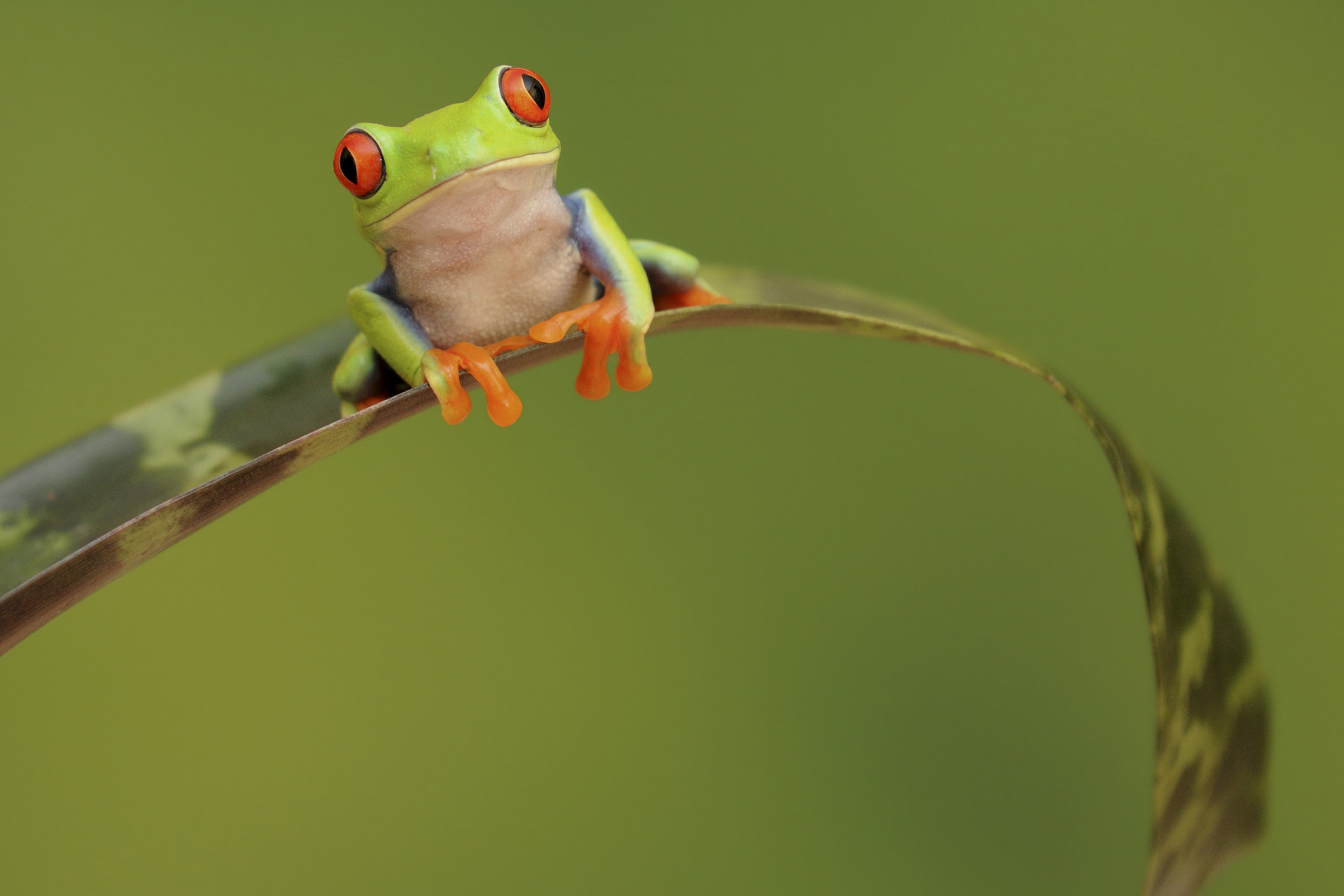 Res: 1920x1280, Frog Image