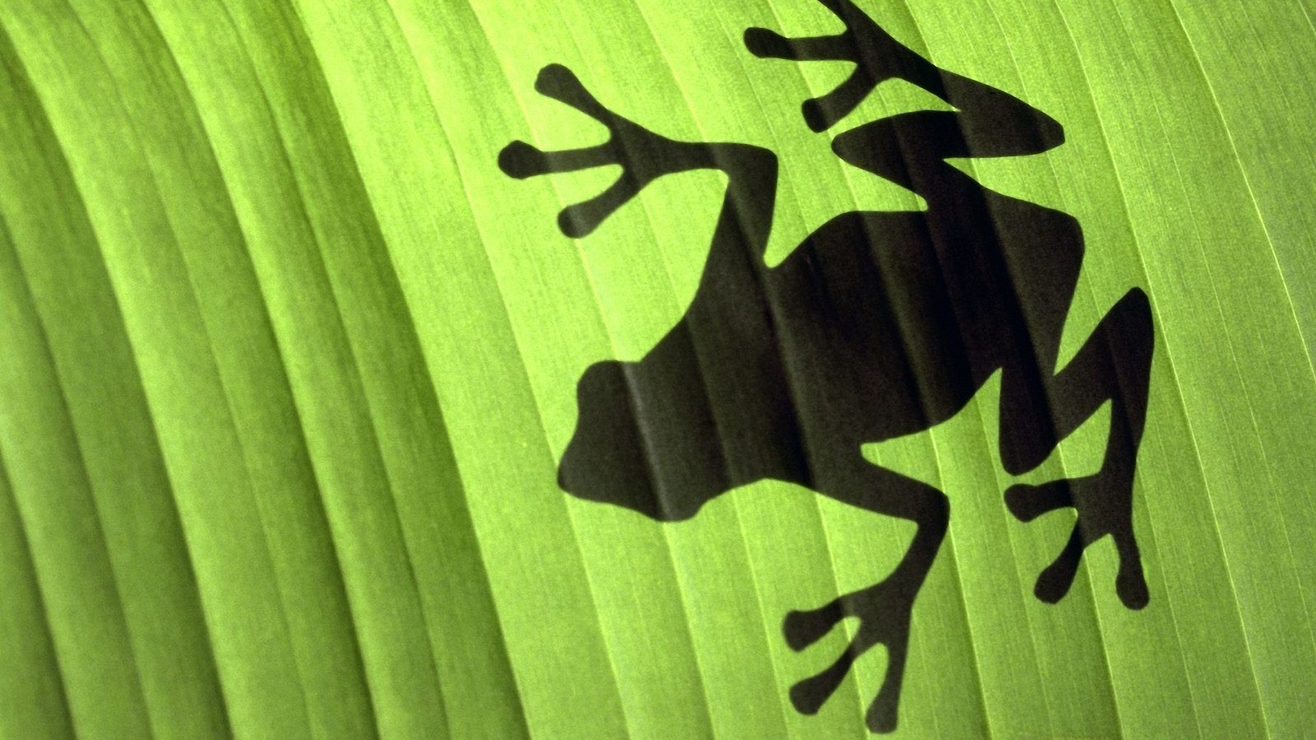 Res: 1920x1080, Frog Wallpapers For Android