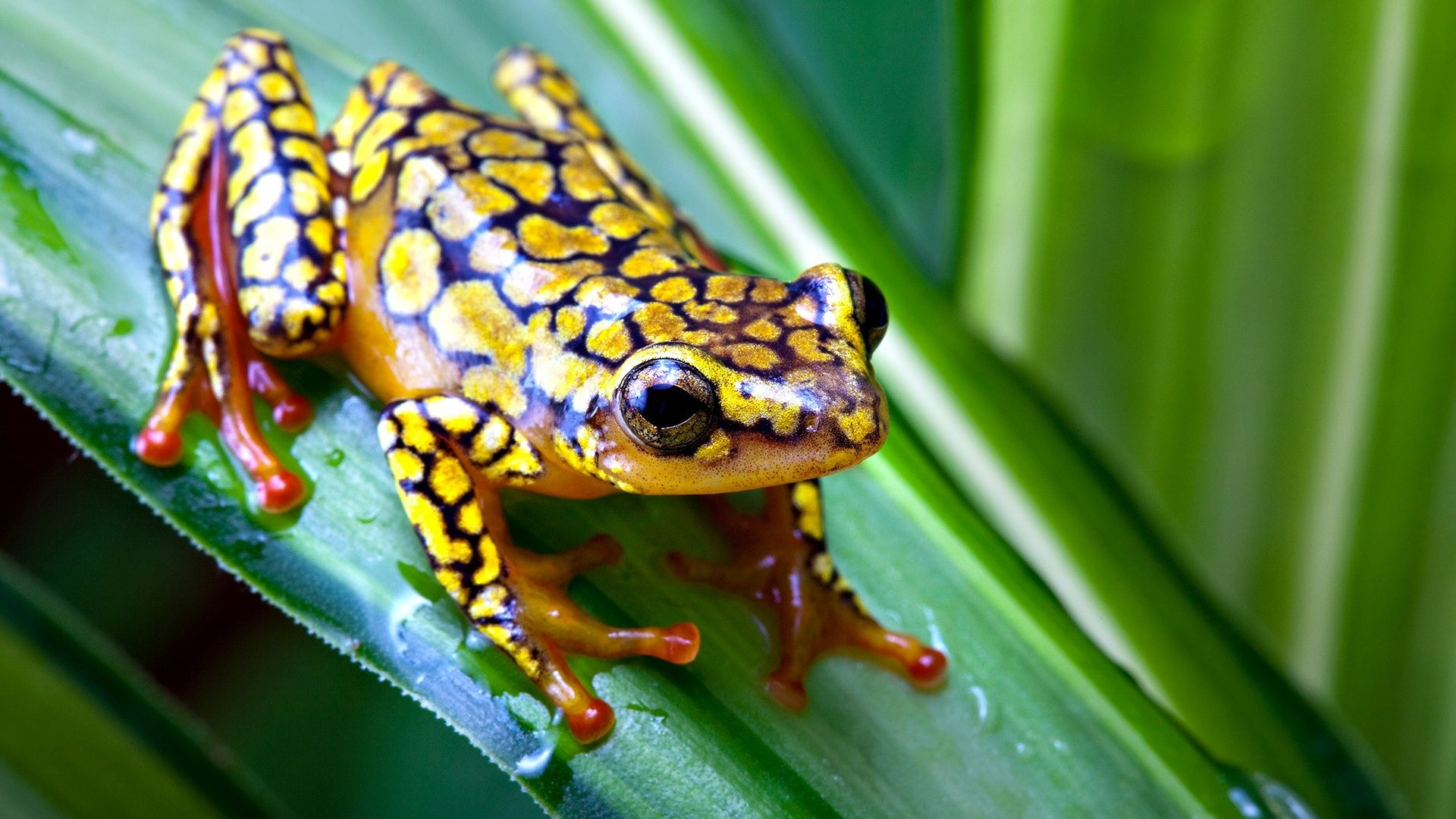Res: 1920x1080, Frogs images Cute Frog HD wallpaper and background photos