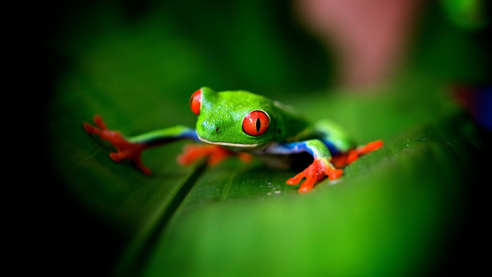 Res: 2048x1152, Cute Frog Wallpaper High Quality Resolution