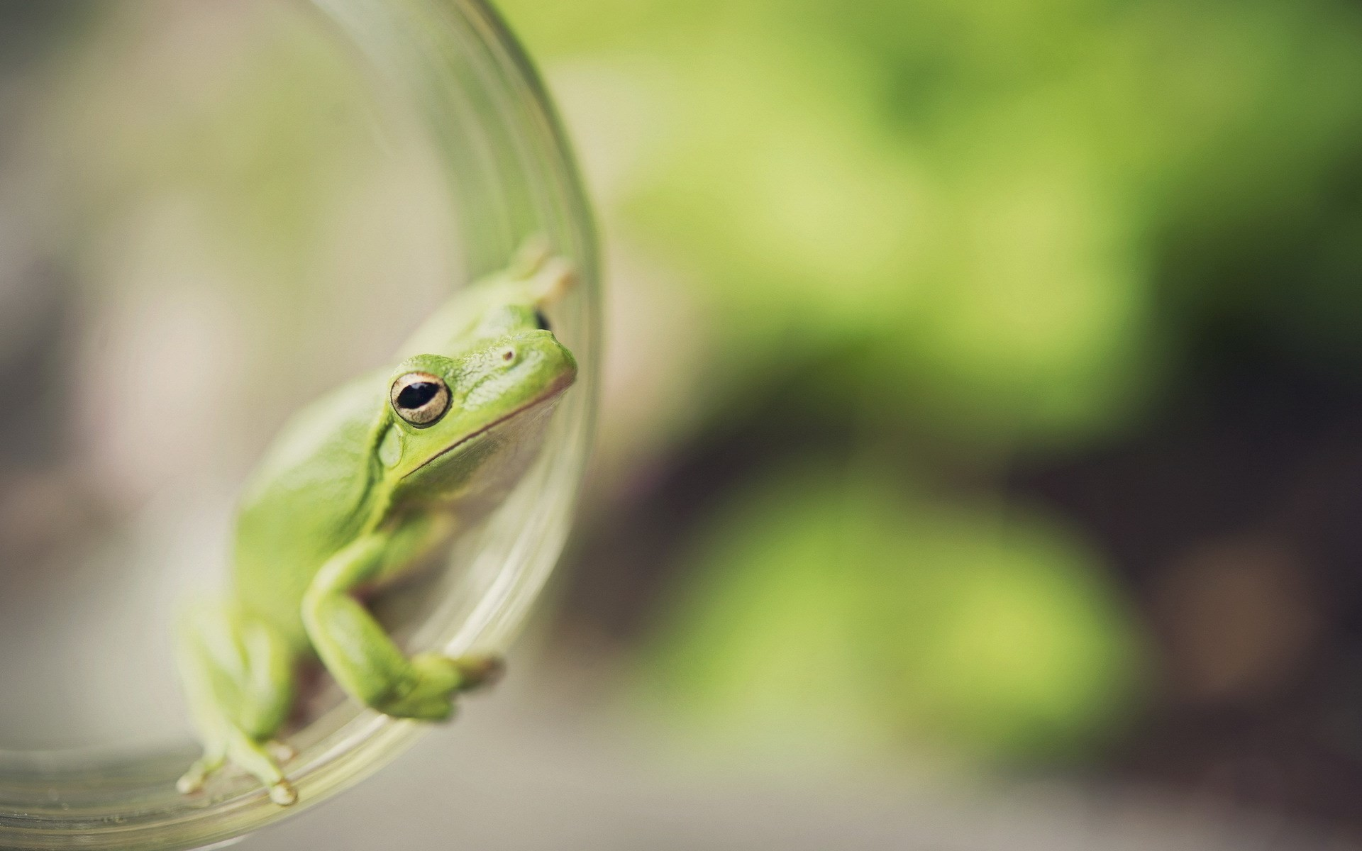 Res: 1920x1200, White-Lipped Tree Frog Wallpapers 23 - 1920 X 1200