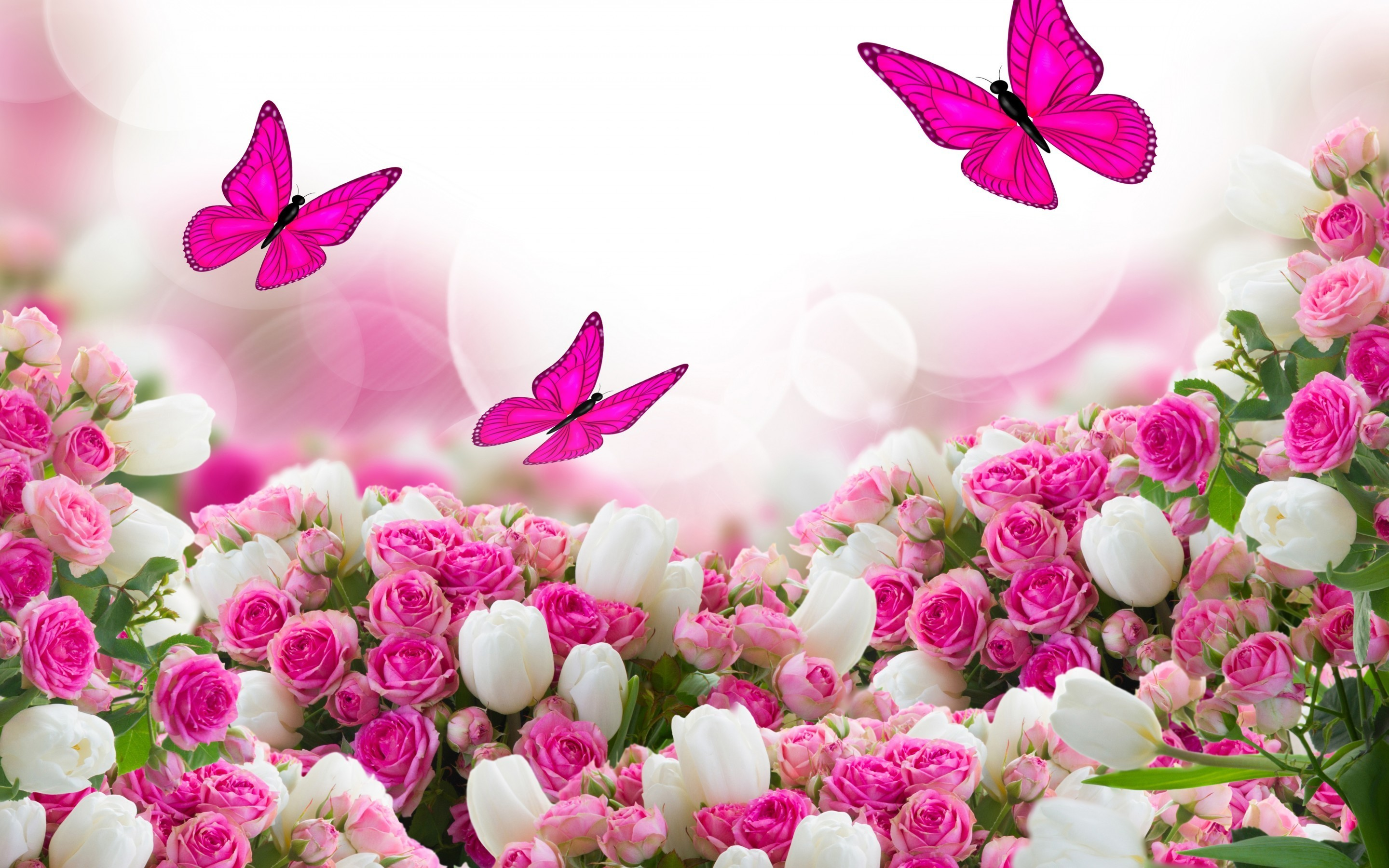 Res: 2880x1800, Fresh pink rose Wallpaper Flowers Nature Wallpapers 2560x1600. 2560x1600  Fresh pink rose Wallpaper Flowers Nature Wallpapers