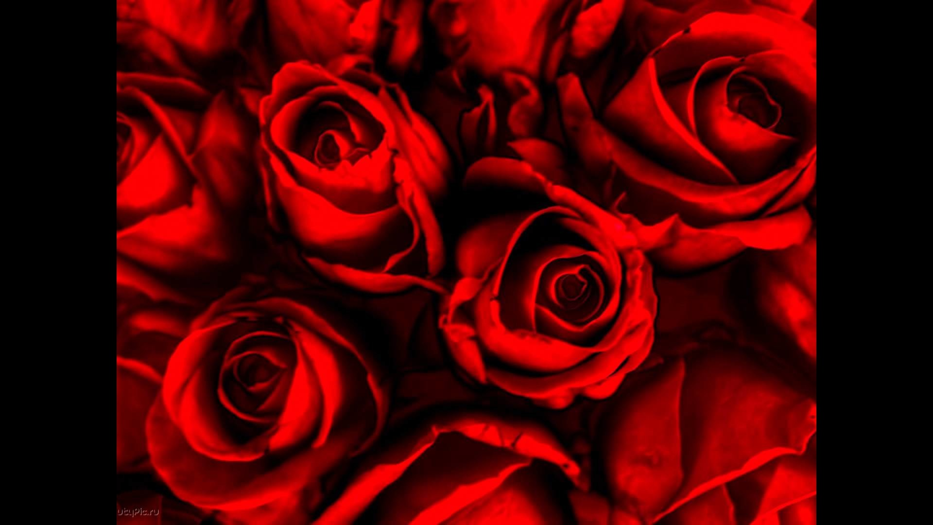 Res: 1920x1080, Latest collection of Rose Flower Wallpapers