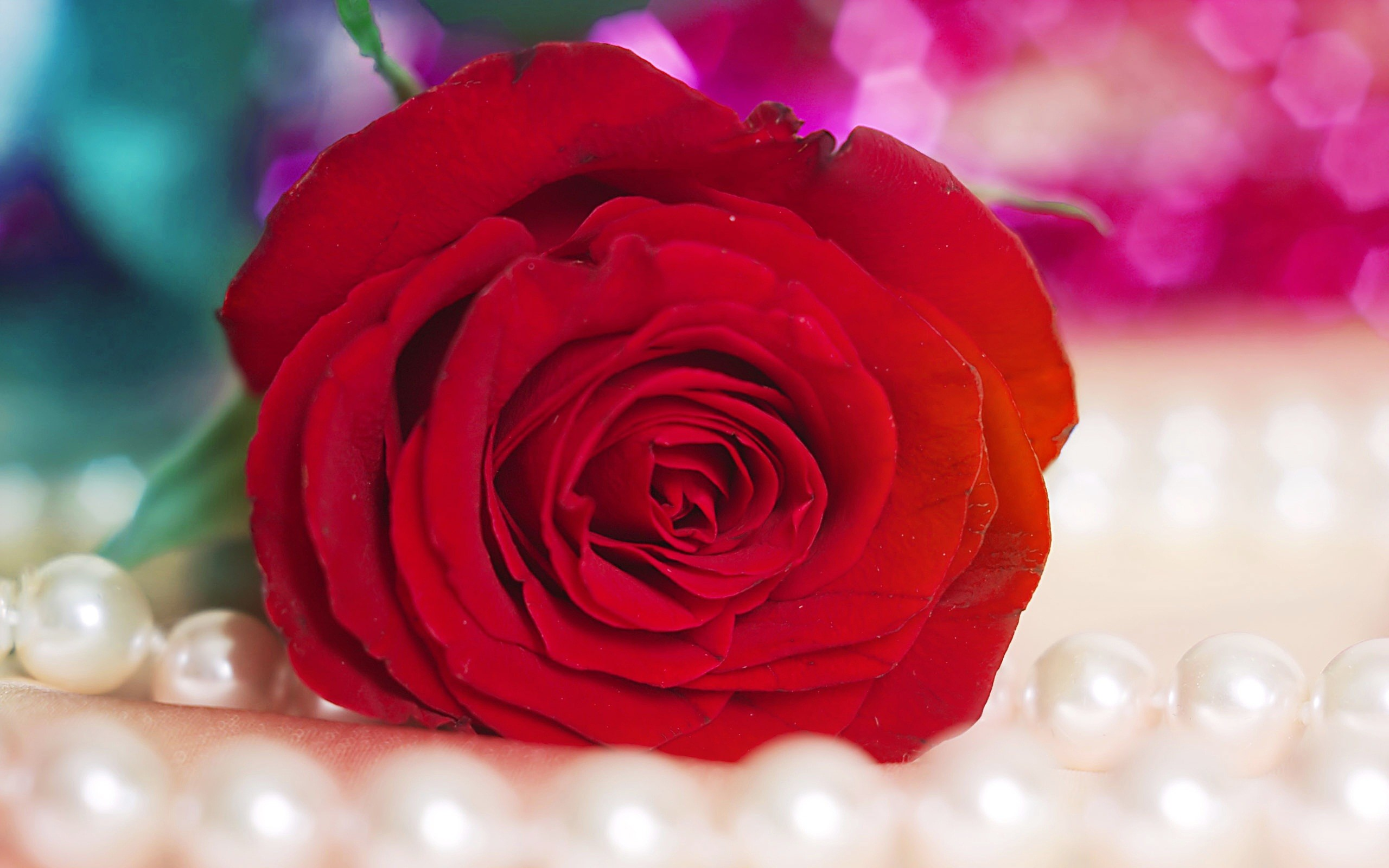 Res: 2560x1600, Most Beautiful Red Rose Flowers Wallpapers