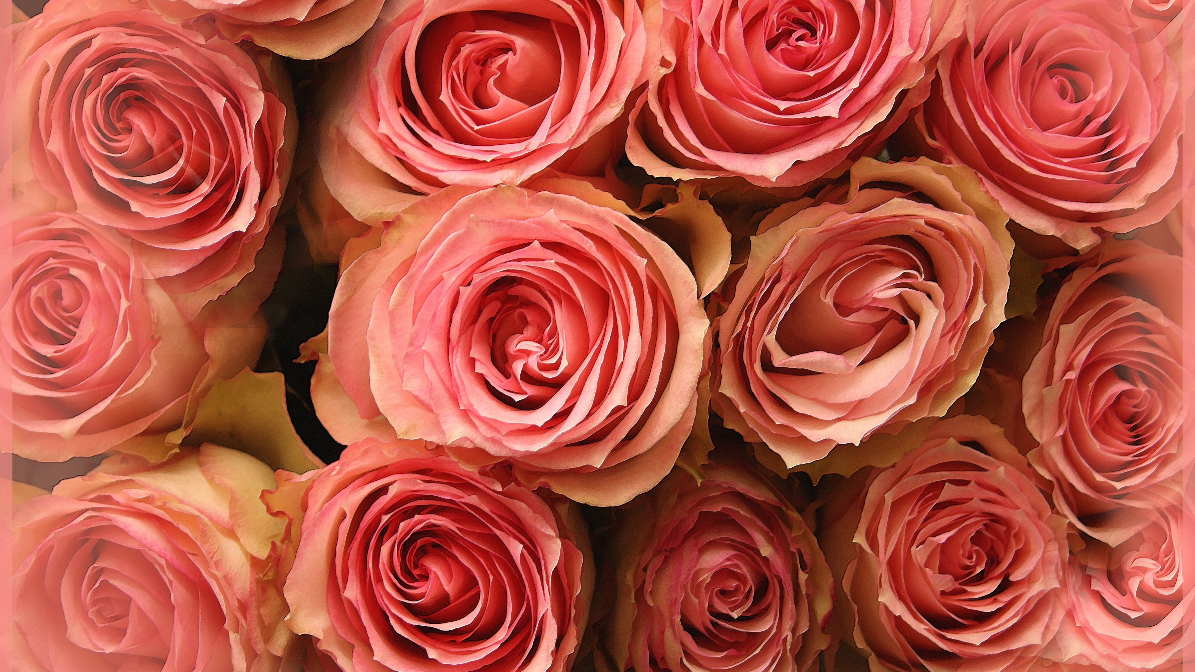 Res: 3840x2160, Flowers / Pink roses Wallpaper