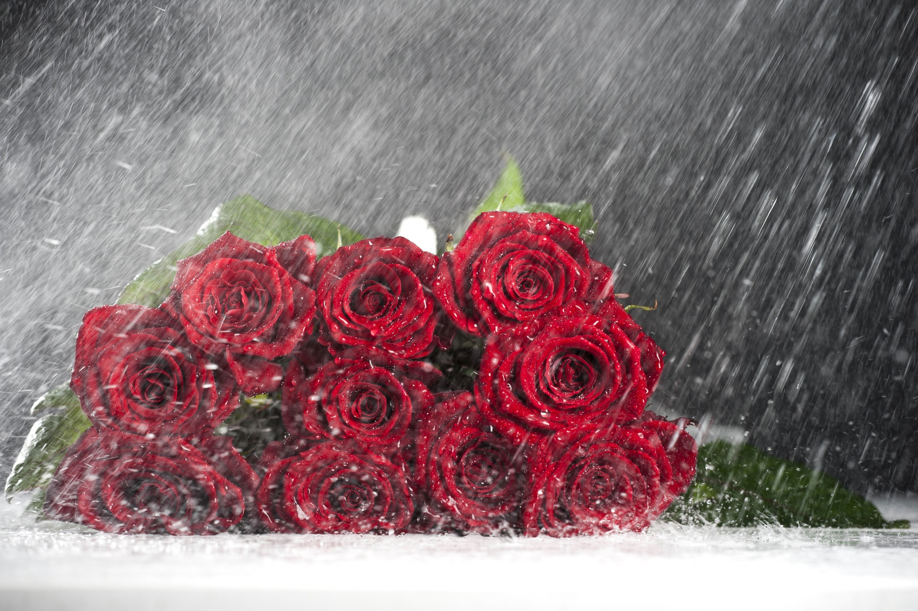 Res: 3100x2063, Nature Rain Love Drops Red Flowers Rose Roses Flower Wallpaper Black And  White