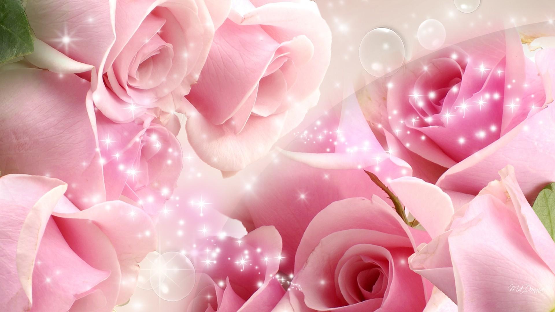 Res: 1920x1080, Cool Pink Rose