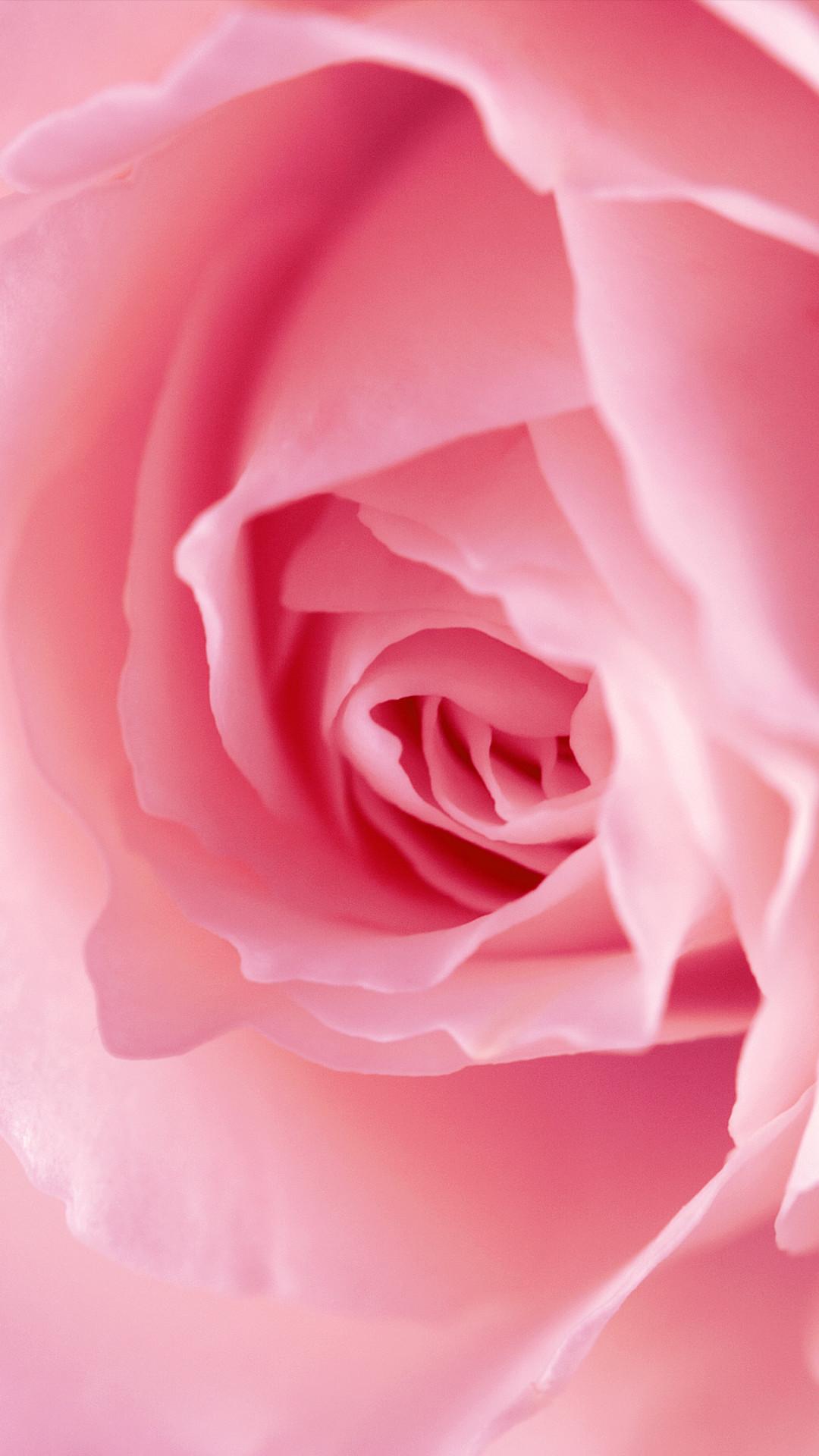 Res: 1080x1920, Pink Rose Phone Wallpaper
