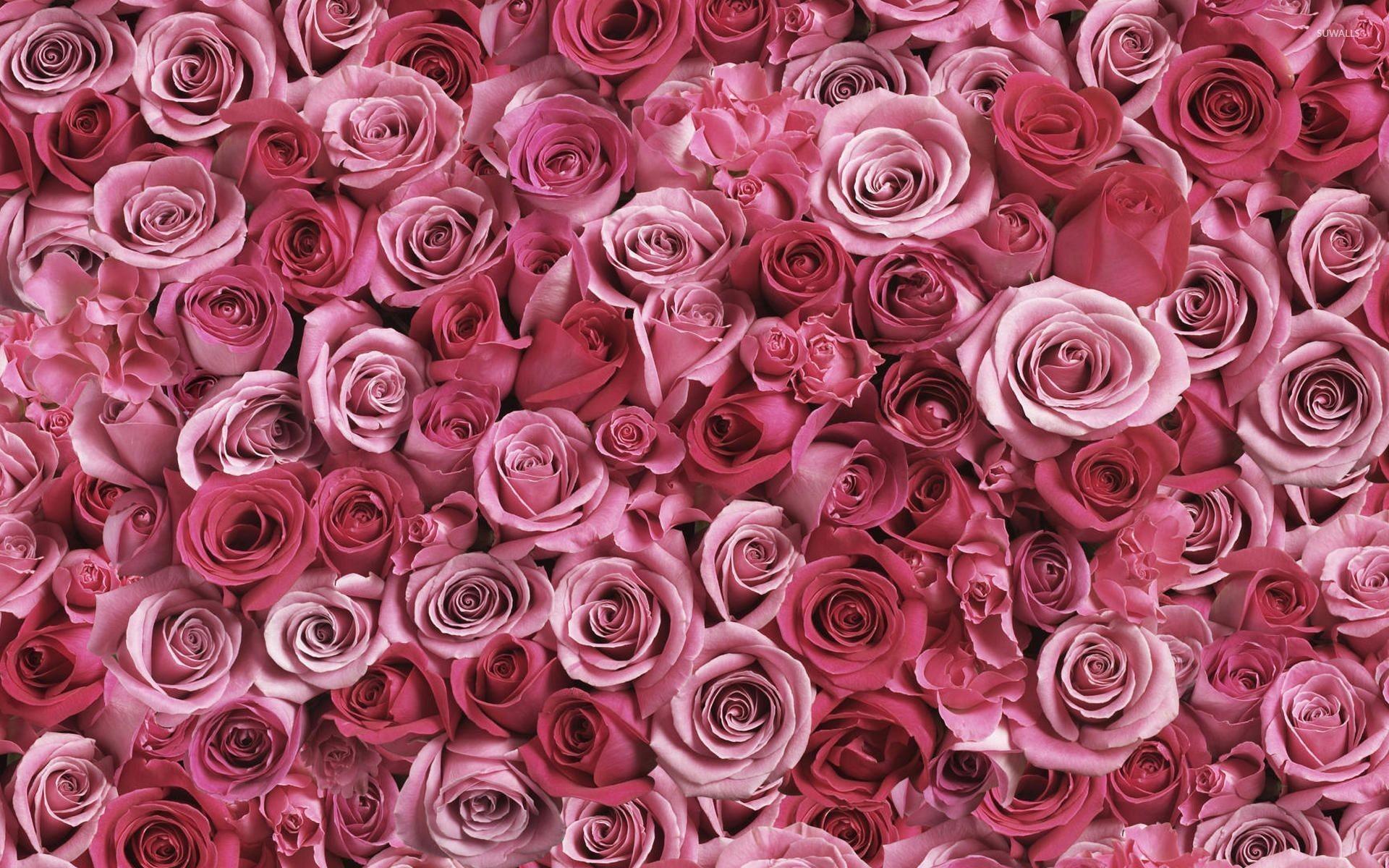 Res: 1920x1200, Pink Rose Wallpaper Desktop Background ~ Desktop Wallpaper Box