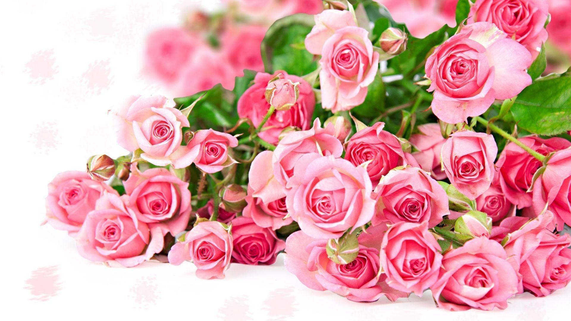 Res: 1920x1080, Flowers For > Pink Roses Wallpapers