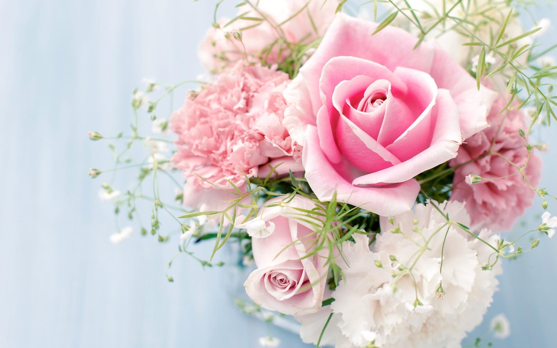 Res: 1920x1200, pink white rose wallpaper white and pink rose wallpaper 1