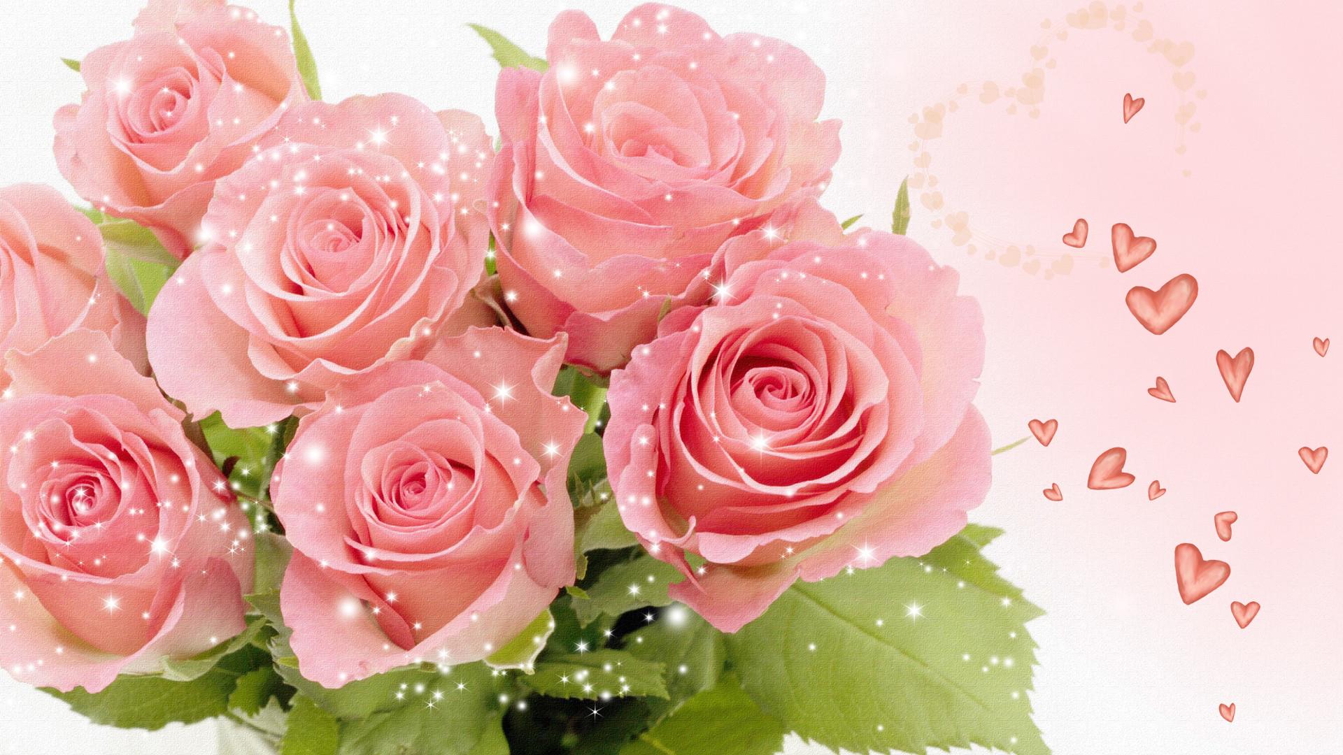 Res: 1920x1080, pink rose wallpaper Free Wallpaper