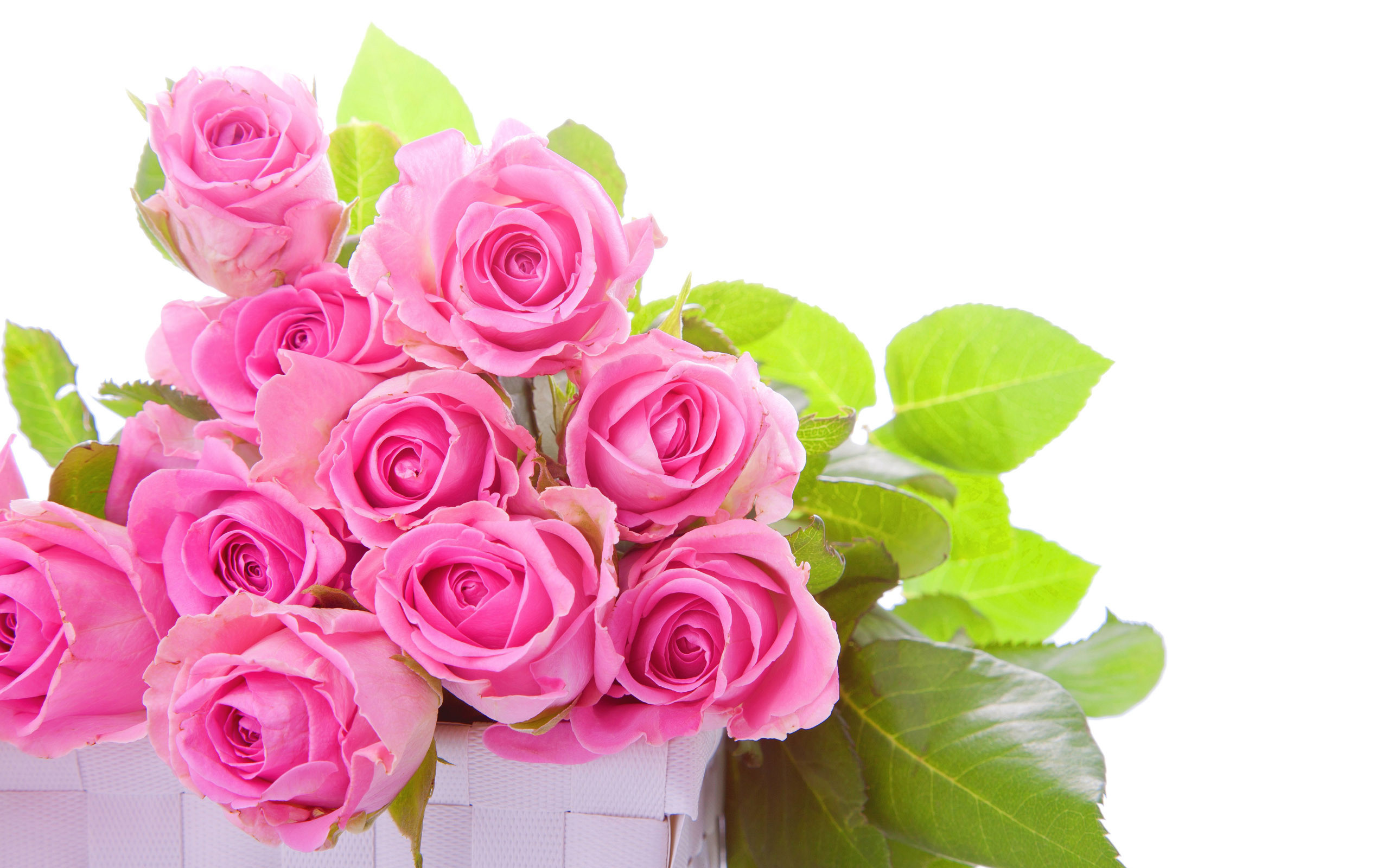Res: 2560x1600, Beautiful Pink Rose Wallpaper 1080p