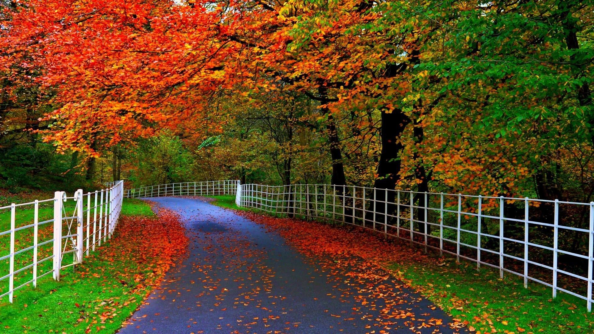 Res: 1920x1080, Collection of Beautiful Nature Widescreen Wallpapers:  px for  mobile and desktop