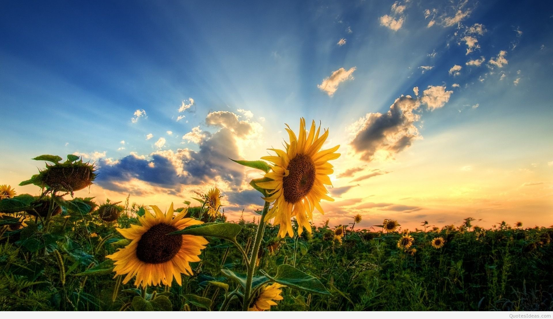 Res: 1920x1107, ... summer-background-wallpaper-flower ...