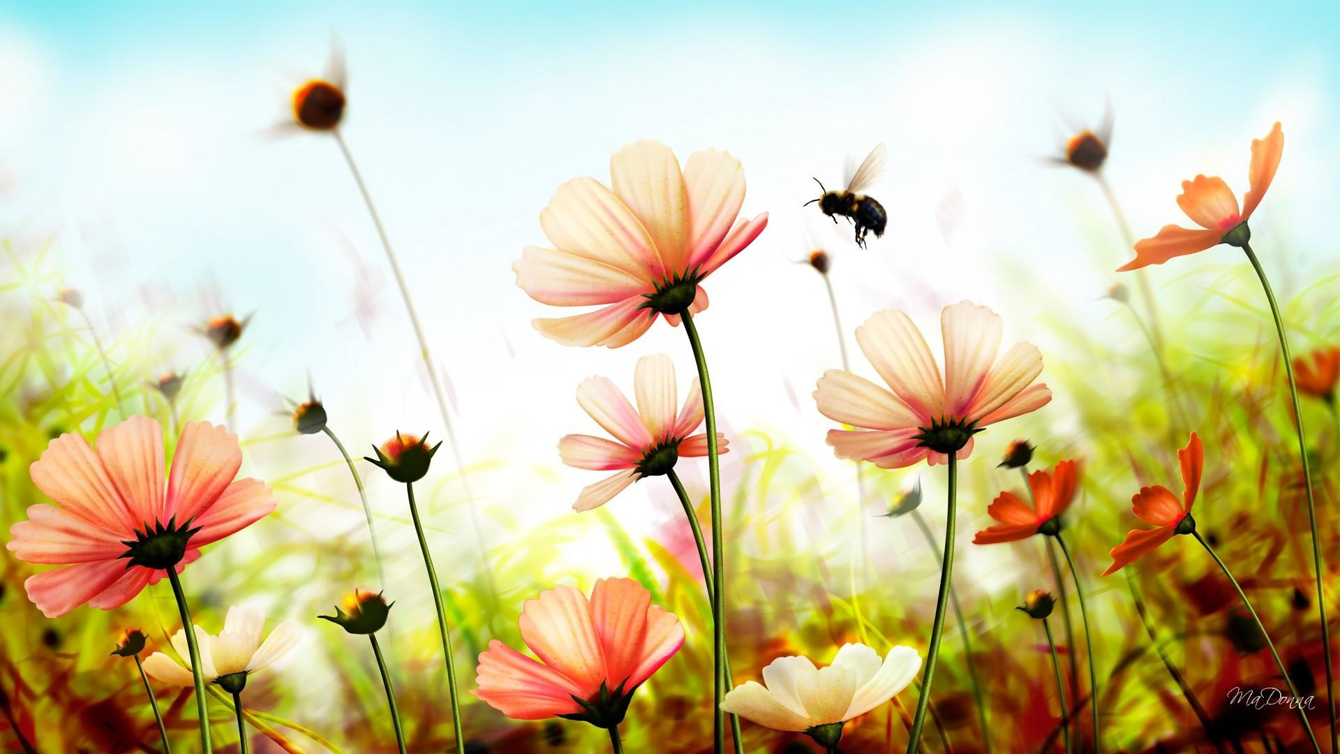 Res: 1920x1080, Summer Flowers Wallpaper High Quality