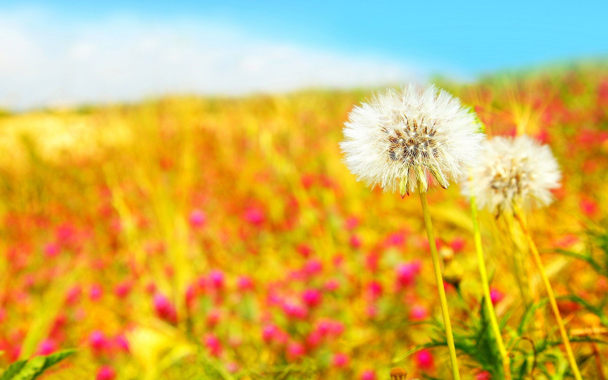 Res: 2560x1600, summer nature backgrounds. summer-nature-wallpaper-0.jpg summer nature  backgrounds