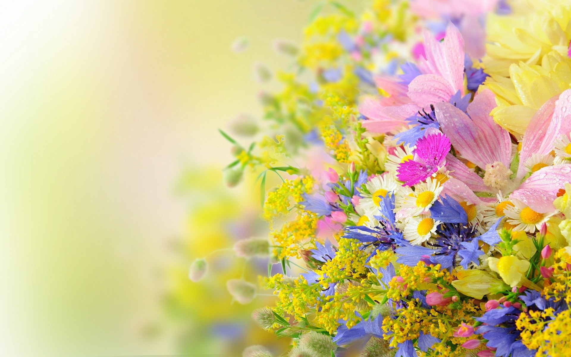 Res: 1920x1200, Summer Flowers Background