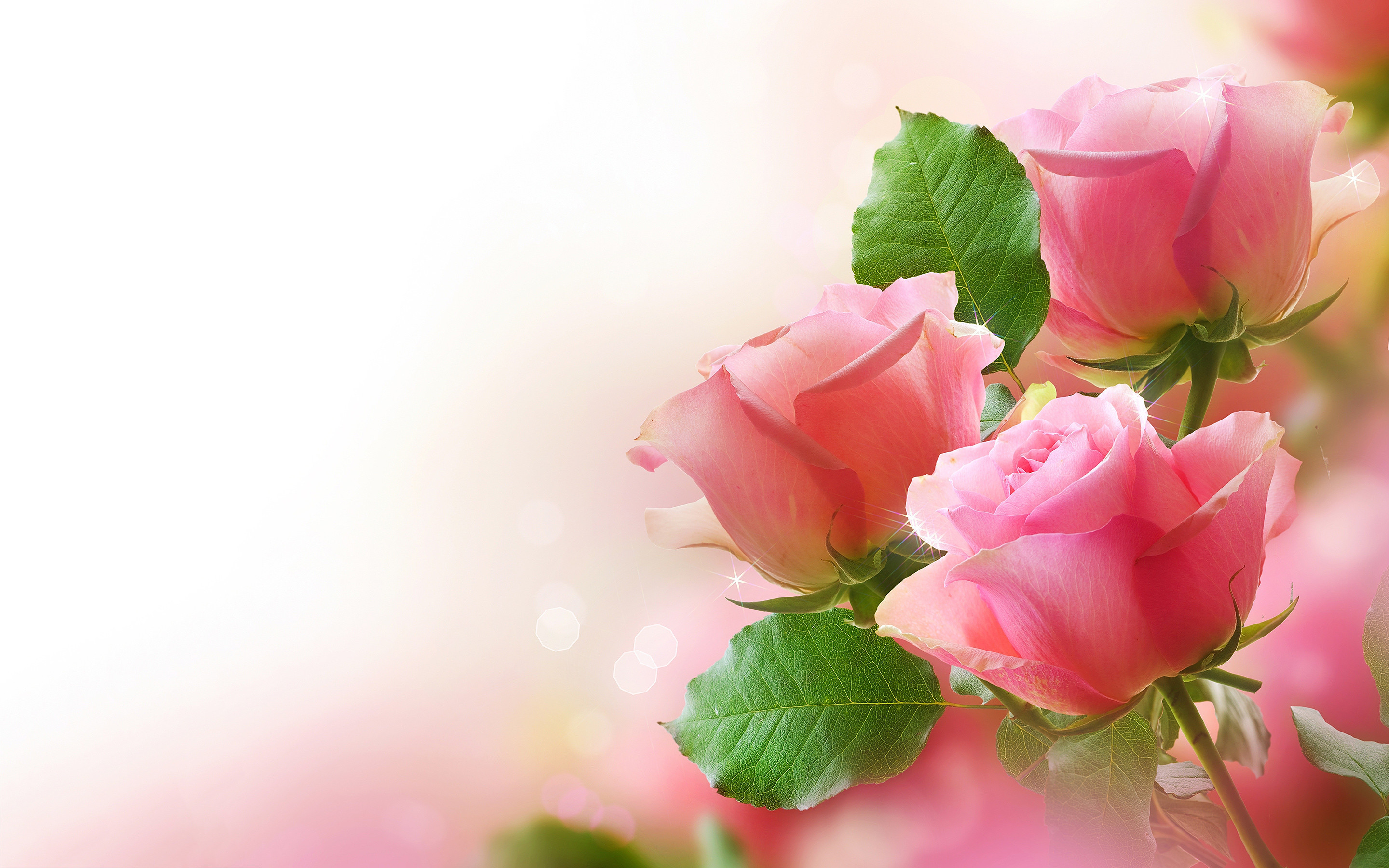 Res: 2880x1800,  Rose Wallpapers and Backgrounds Posts related to Pink Roses  Background Pink Roses Wallpaper Pink Roses
