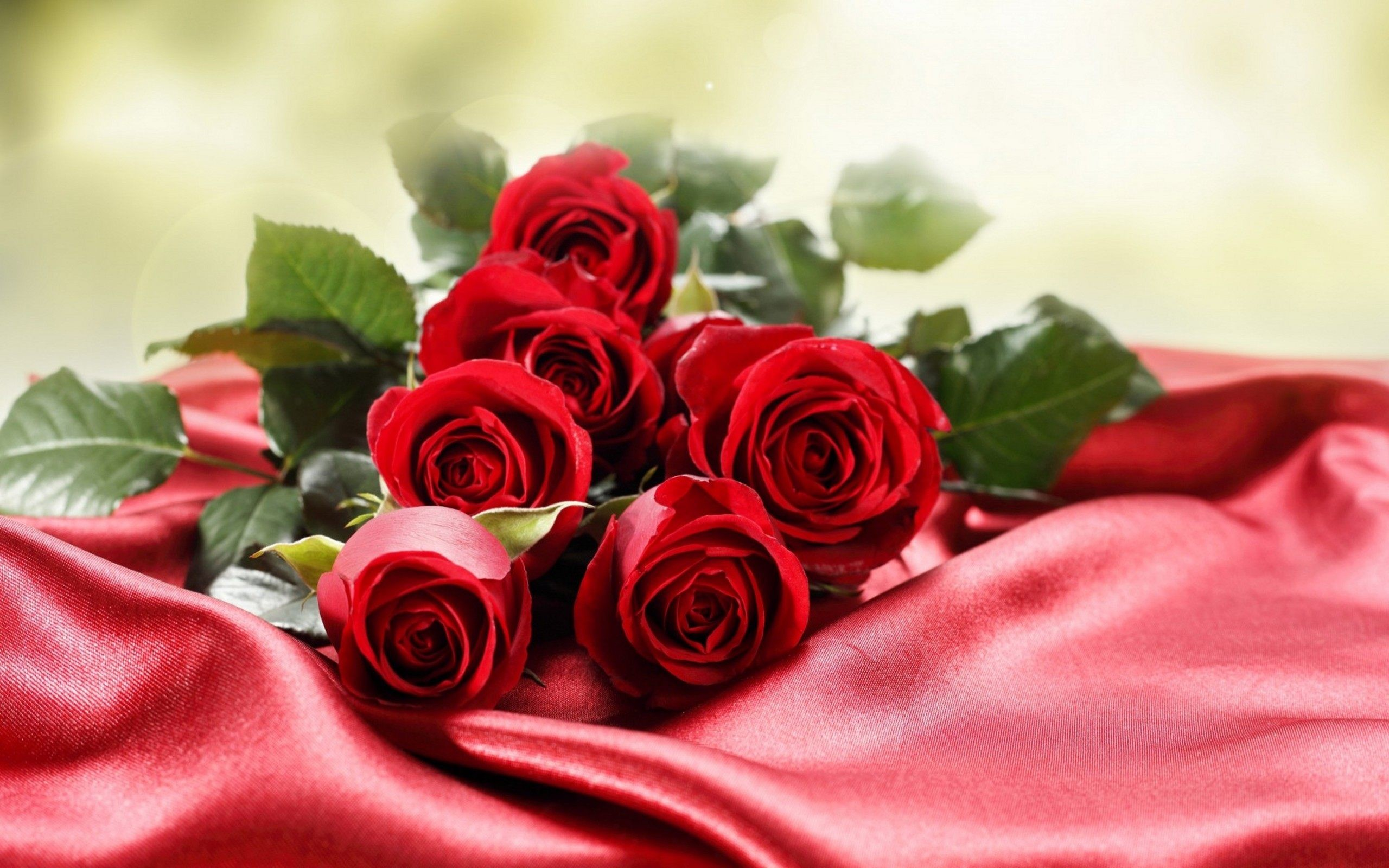 Res: 2560x1600, beautiful roses wallpapers photos pics images pictures (12)