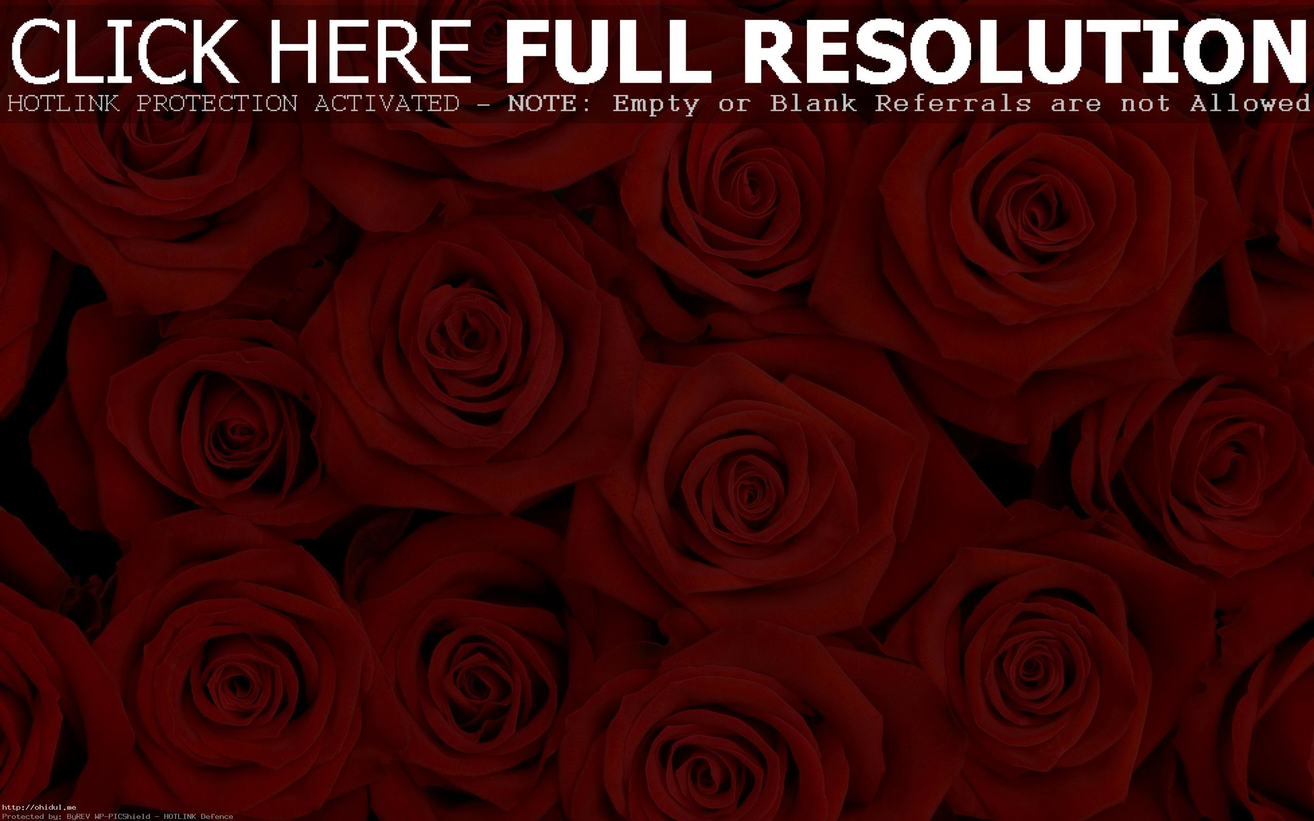 Res: 2560x1600, Red Rose Flower Backgrounds Wallpaper Cave Red Rose Wallpaper 10  WallpaperCanyon Home ...