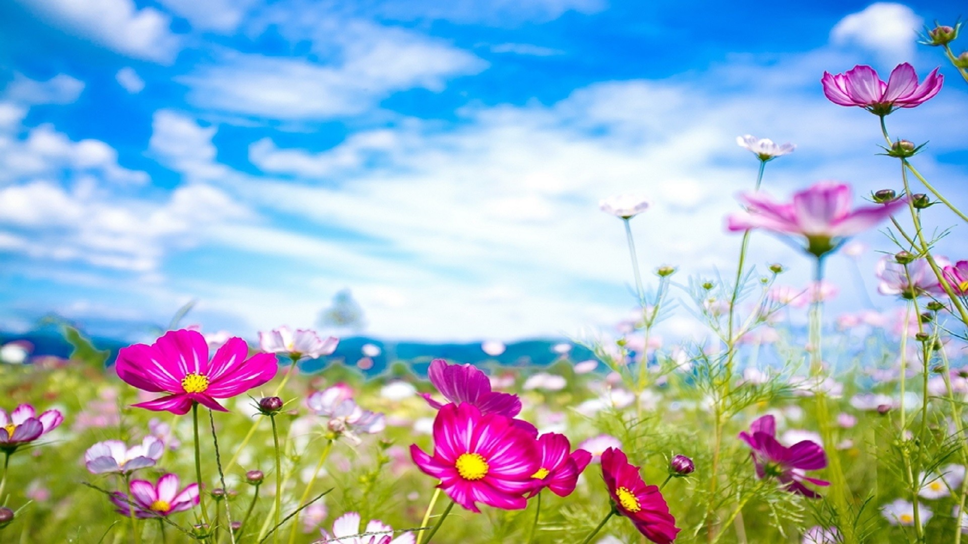 Res: 1920x1080, beautiful-flowers-summer-season-hd-wallpapers-free