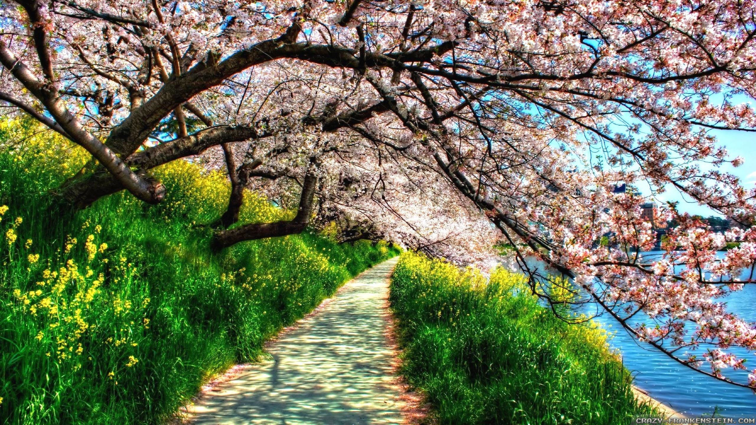 Res: 2560x1440, Spring Nature Photo Images 6 HD Wallpapers | Hdimges.