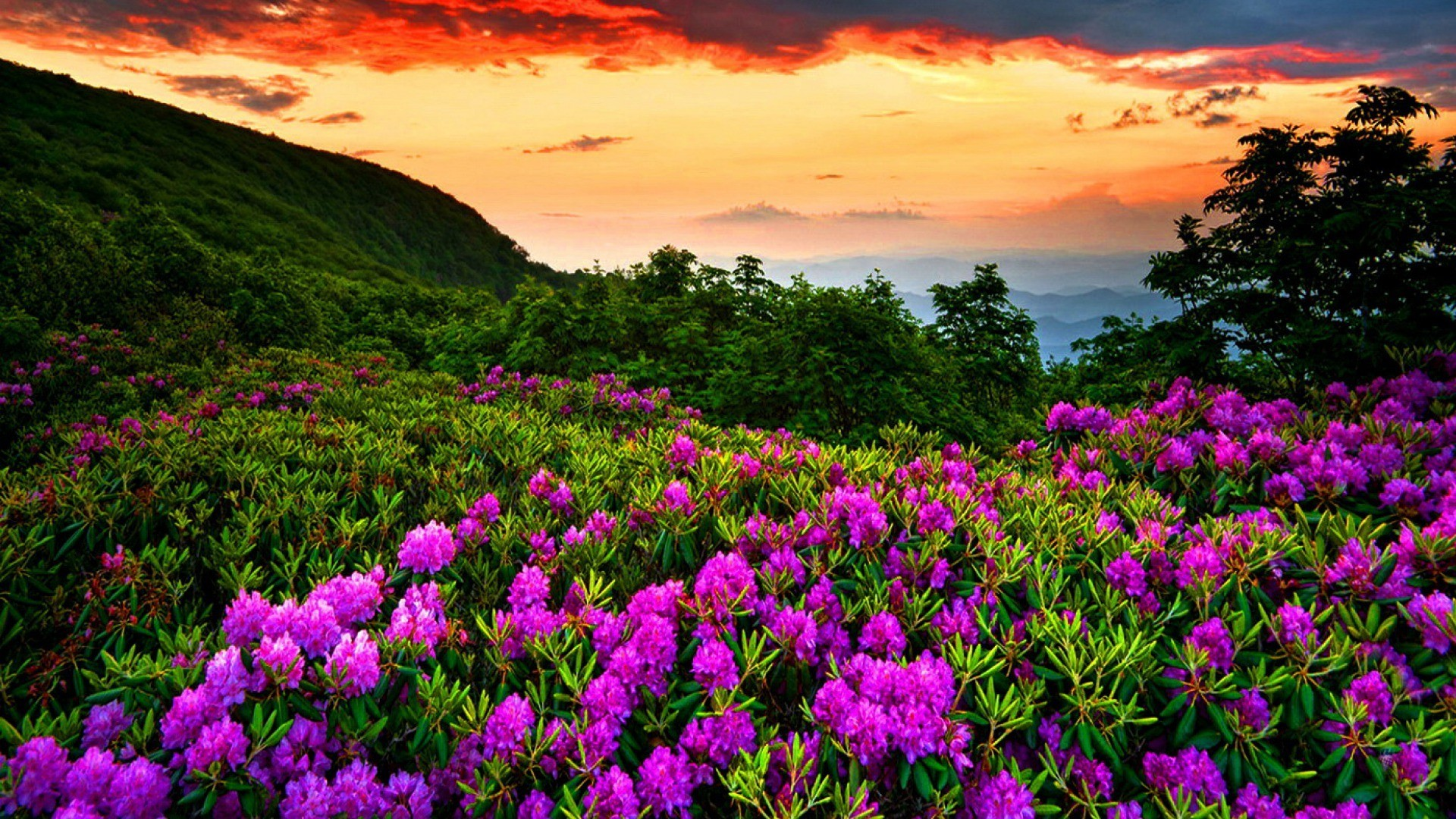 Res: 1920x1080, Beautiful Nature Spring