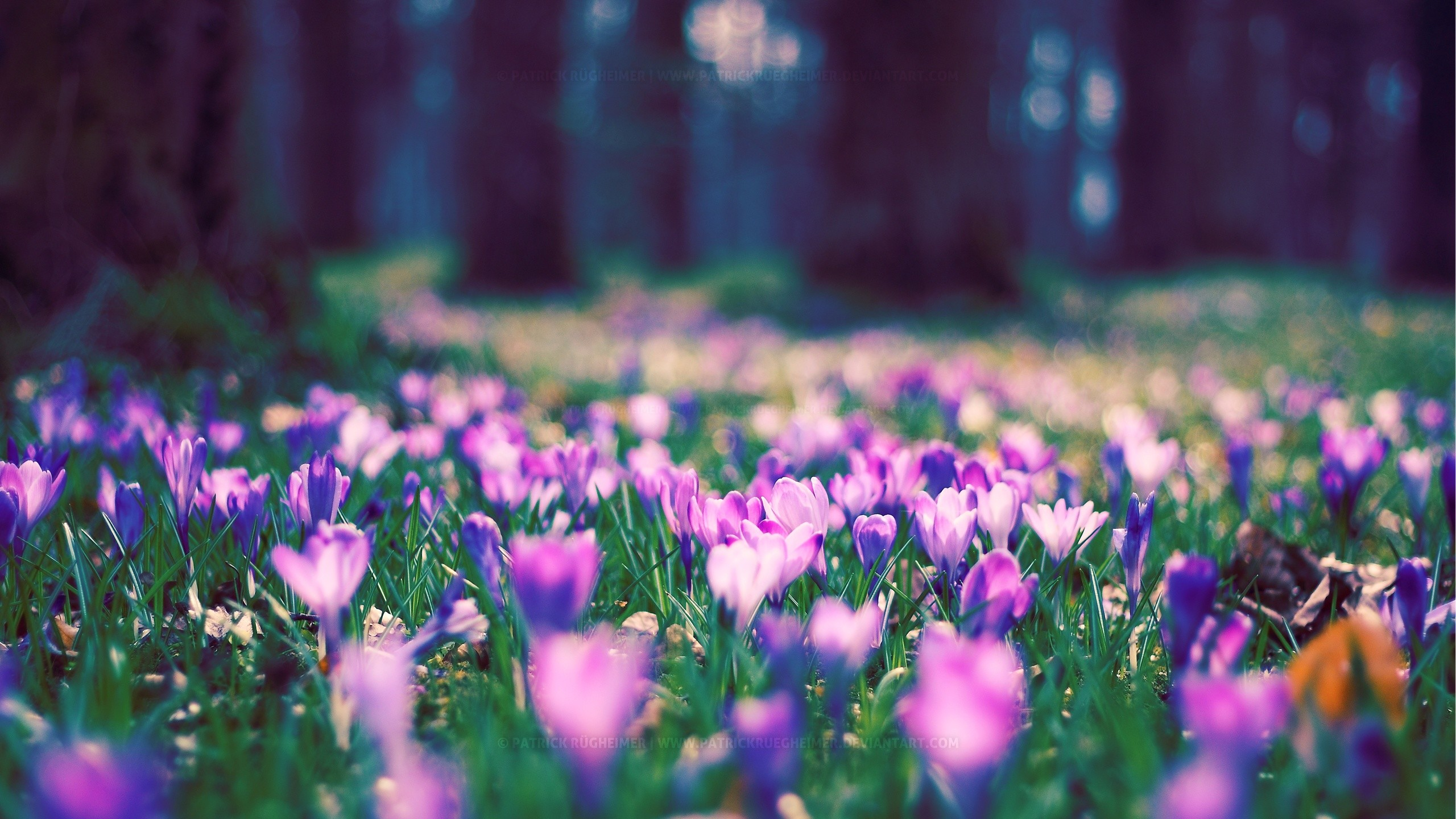 Res: 2560x1440, Spring Flower Park Spring Flower Park · Spring Park Wallpaper Spring Nature