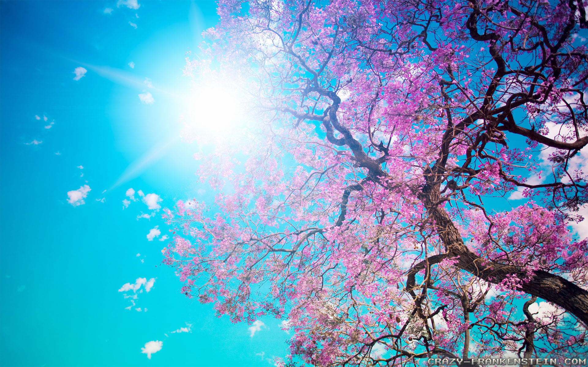 Res: 1920x1200, HD : 1280x720 | 1366x768 | 1920x1080 | 2560x1440 · Spring nature wallpapers