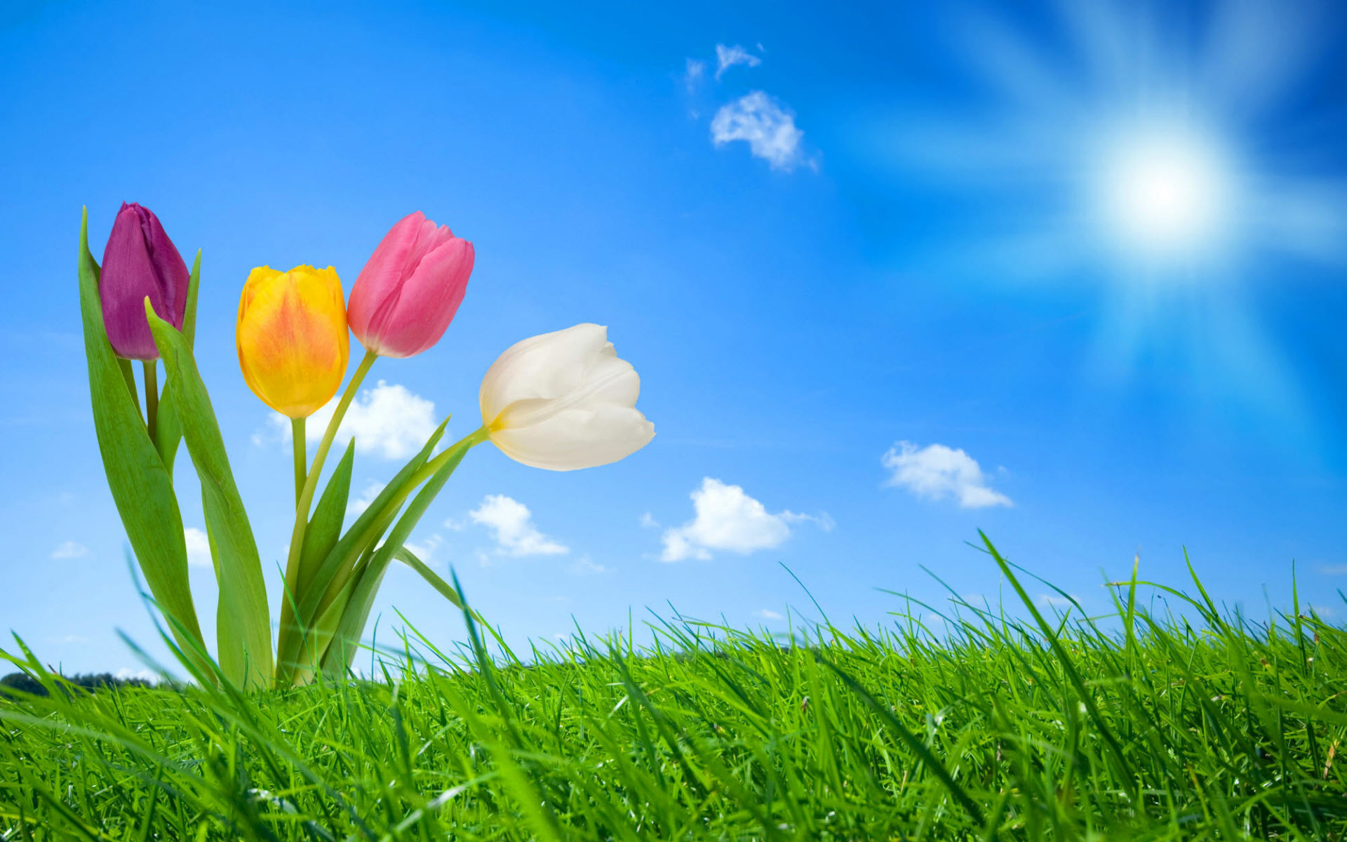 Res: 1920x1200, Spring Nature Facebook Covers. Original: ( Widescreen Wallpapers )