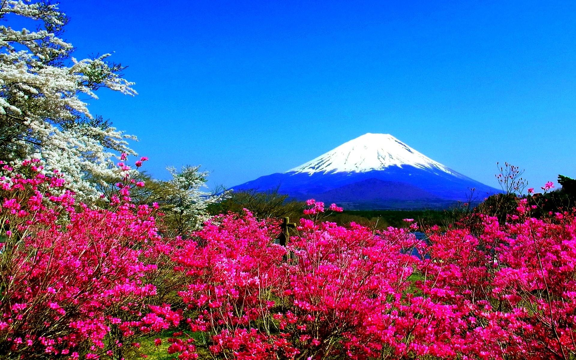 Res: 1920x1200, Spring mountain flowers fuji nature Japan spring hd wallpaper