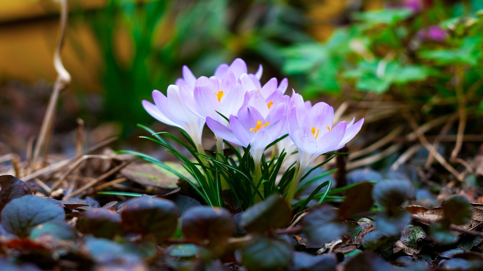 Res: 1920x1080, Spring Widescreen Wallpaper Hd Images Flowers For Desktop Pc