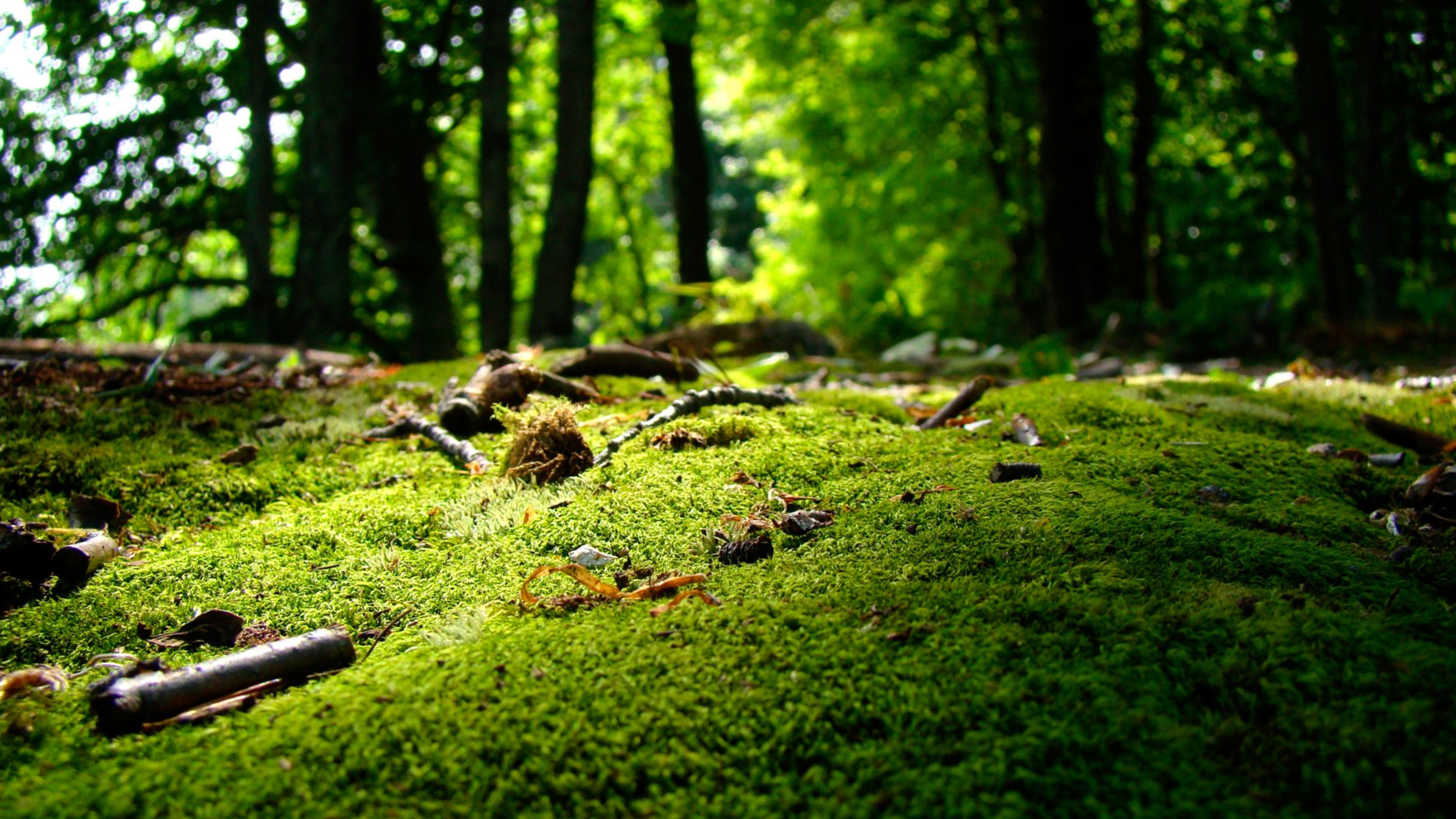 Res: 3840x2160, Inspiring Spring Nature 4K Wallpaper