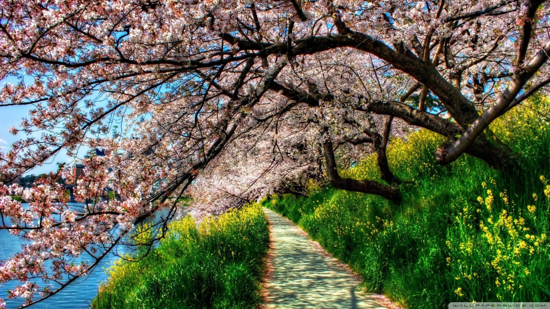 Res: 1920x1080, Trees - Spring Flowered Trees Flowers Nature Wallpaper Download Free for HD  16:9 High