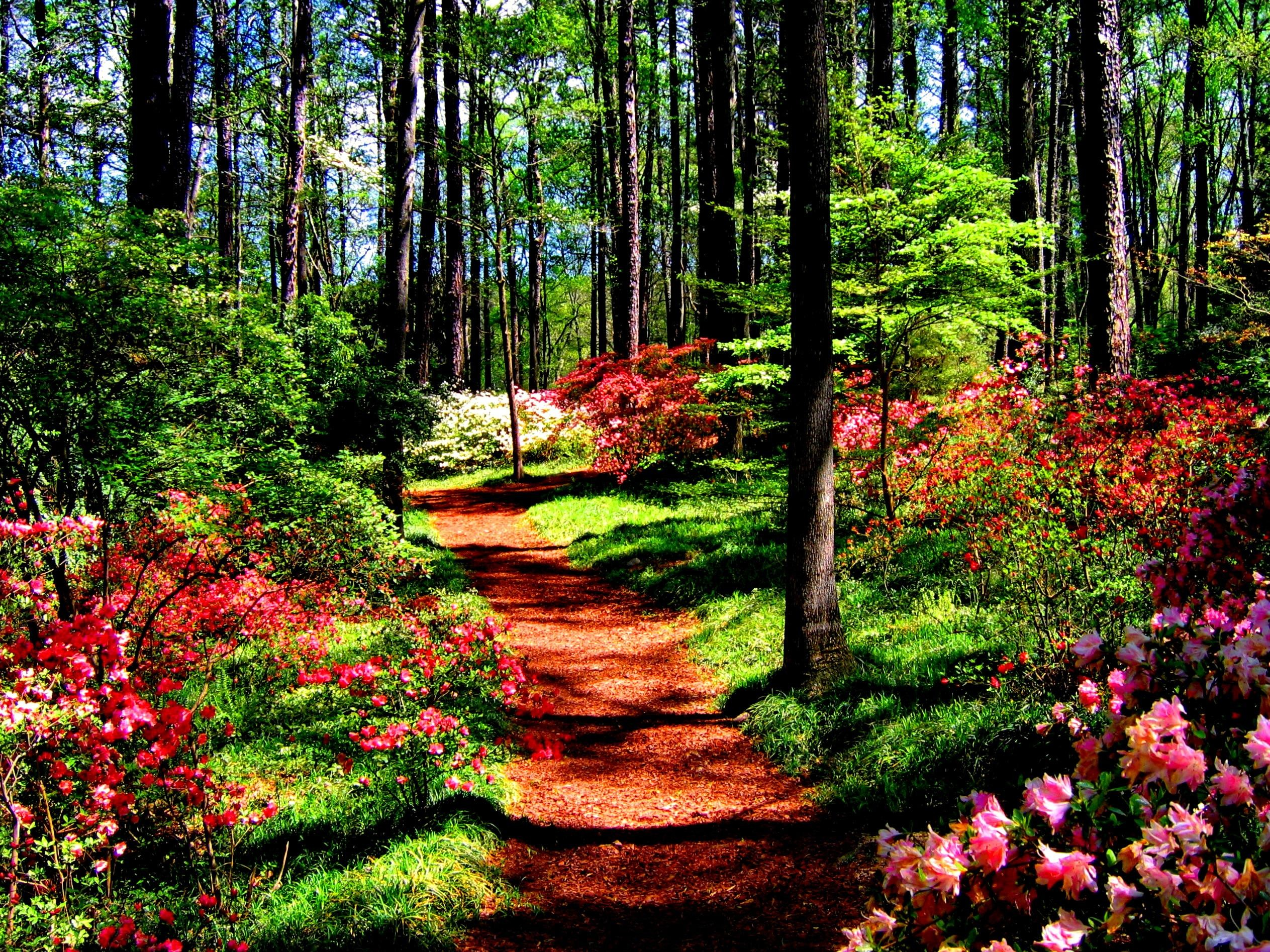 Res: 2527x1895, Forest, In, Spring, Hd Nature Wallpapers, Road, Wallpaper, 2527×1895 Wallpaper  HD
