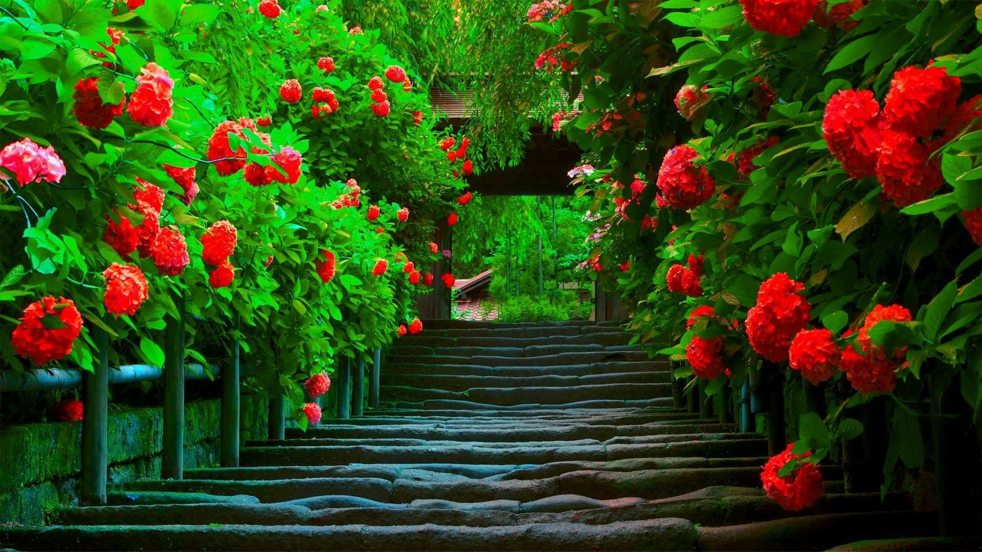Res: 1920x1080, beautiful love wallpapers for desktop full screen flowers flower spring  nature splendor bright paradise green beautiful red path colors wallpapers  hd 1080p