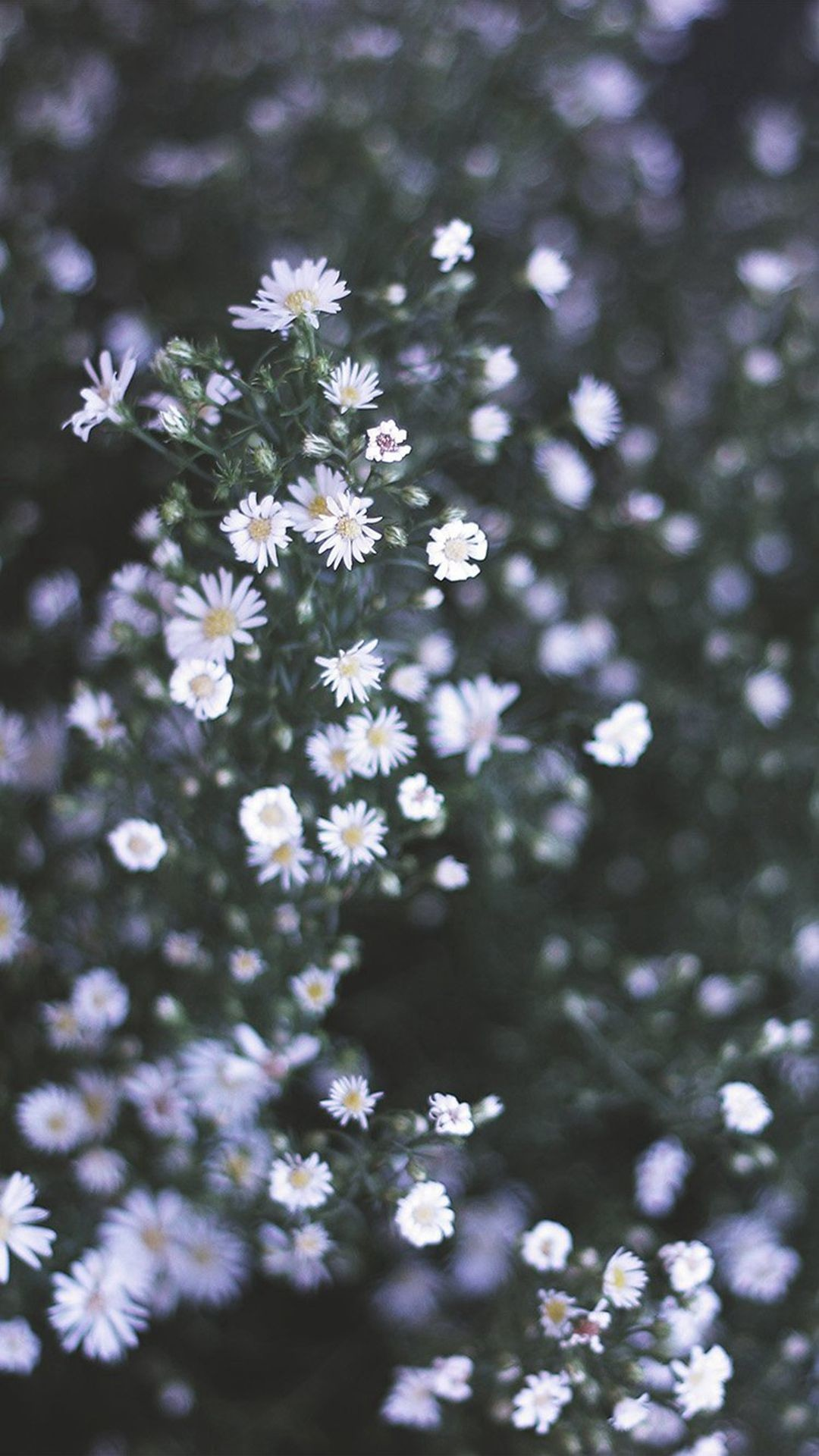 Res: 1080x1920, Flower White Spring Nature #iPhone #6 #wallpaper