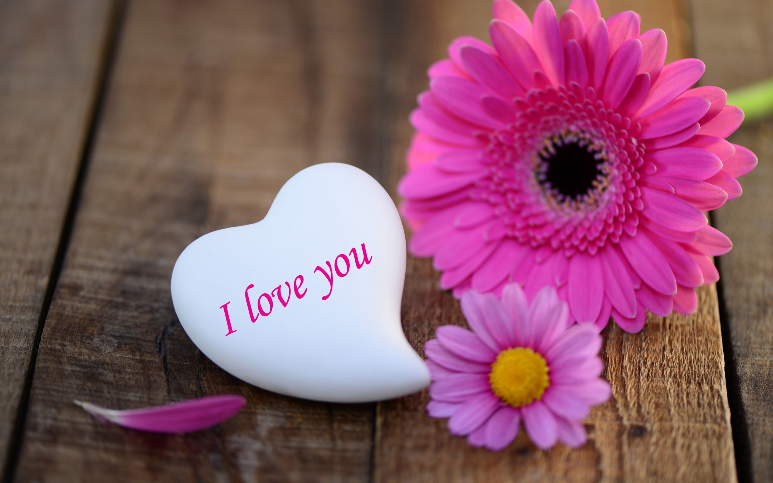 Res: 2560x1600, pink-daisies-heart-stone-i-love-you-wide- ...