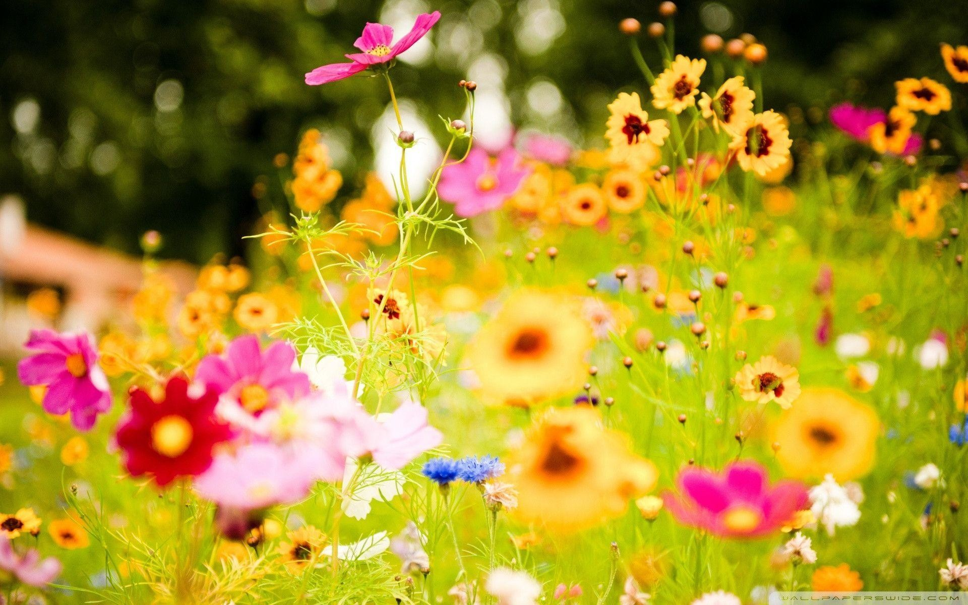Res: 1920x1200, Summer Backgrounds Flowers Images 6 HD Wallpapers | Hdimges.